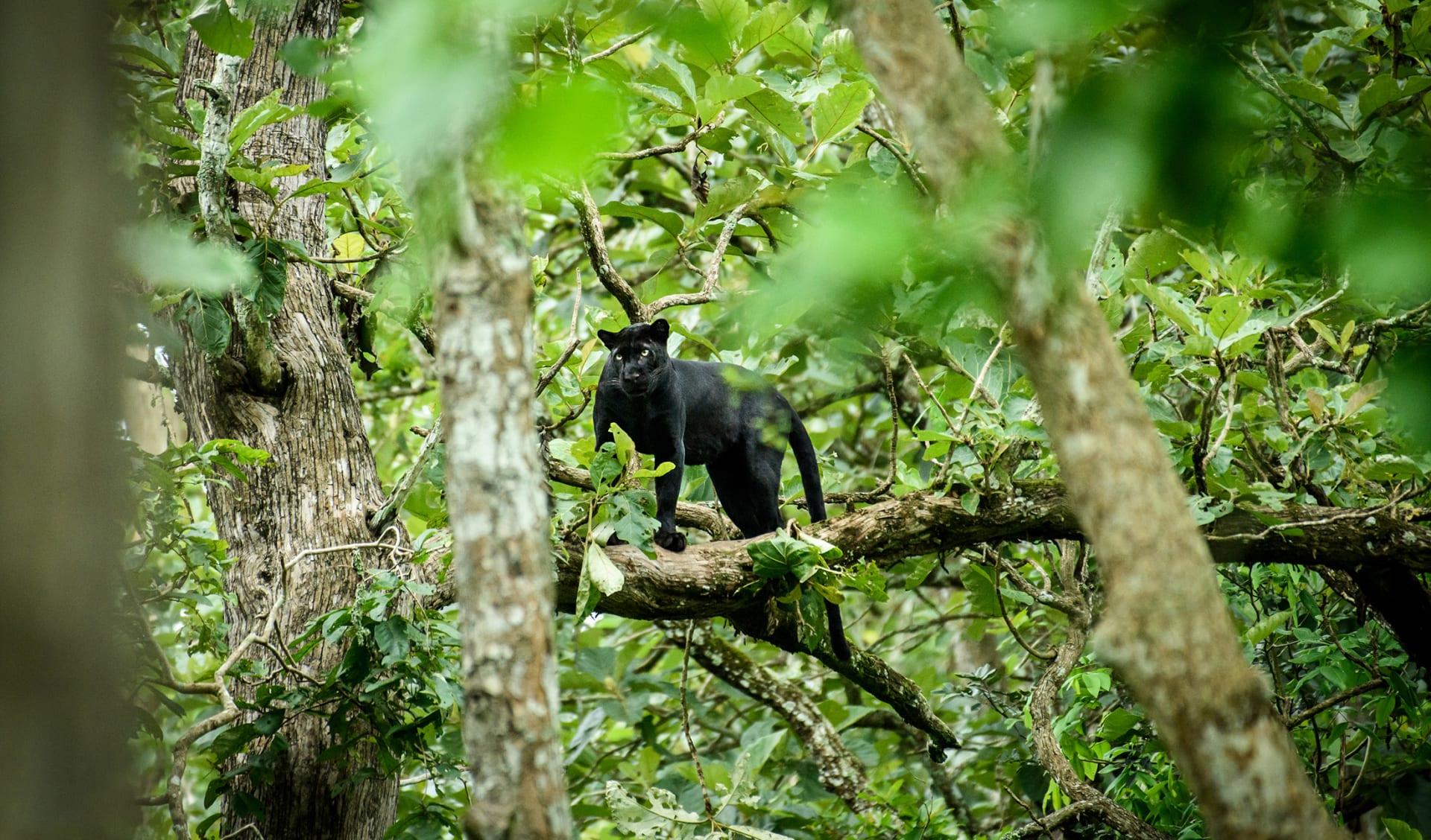 Ranthambore Nationalpark, Indien
