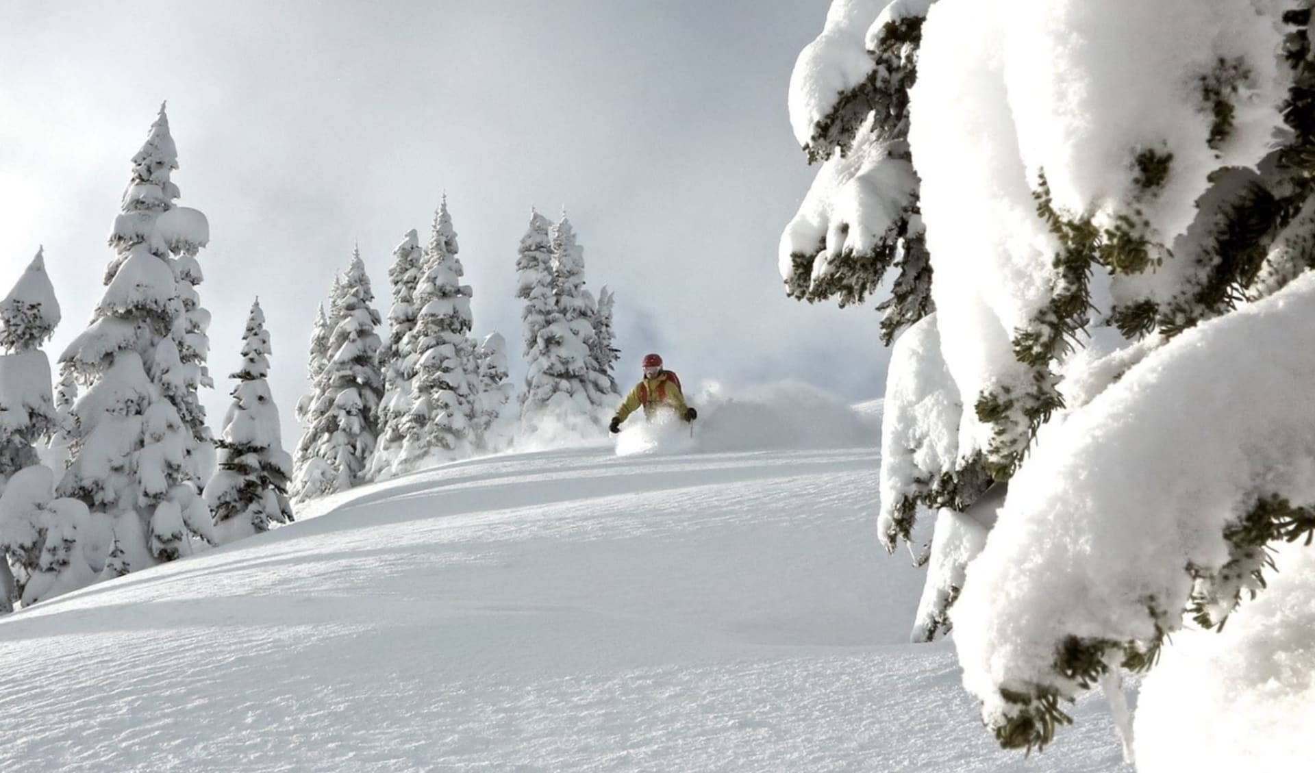 Adamants 7 Tage (CMH) ab Calgary: Kanada - CMH - Adamants Lodge - Skifahrer im Powder