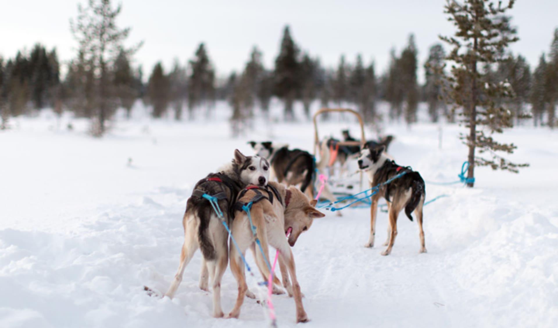 Cute dogs in winter