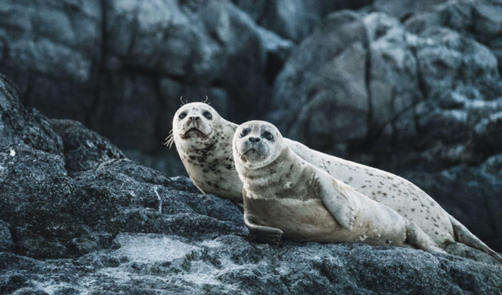 Seals in British Columbia, Canada