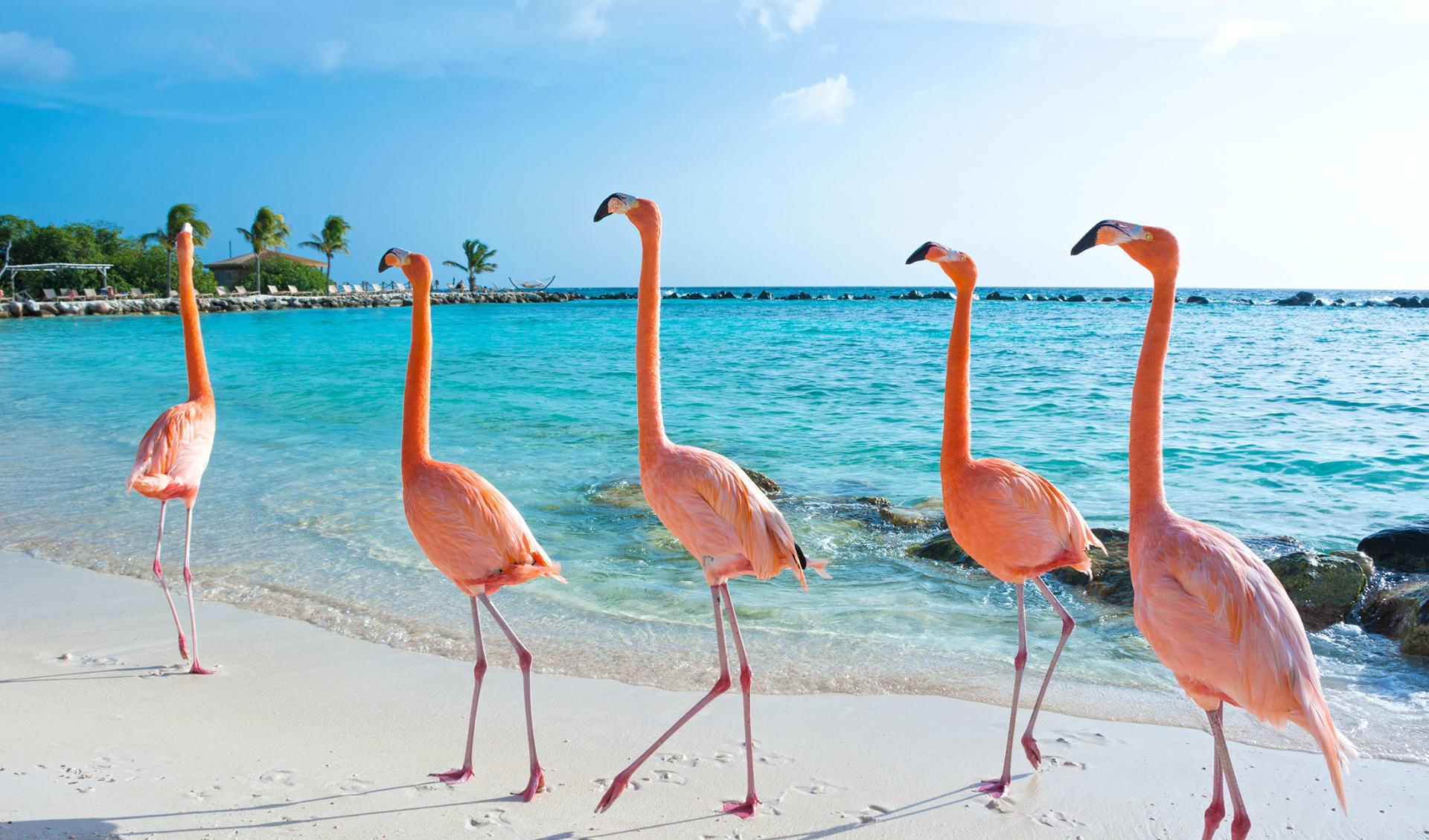 ABC-Inseln, Karibik