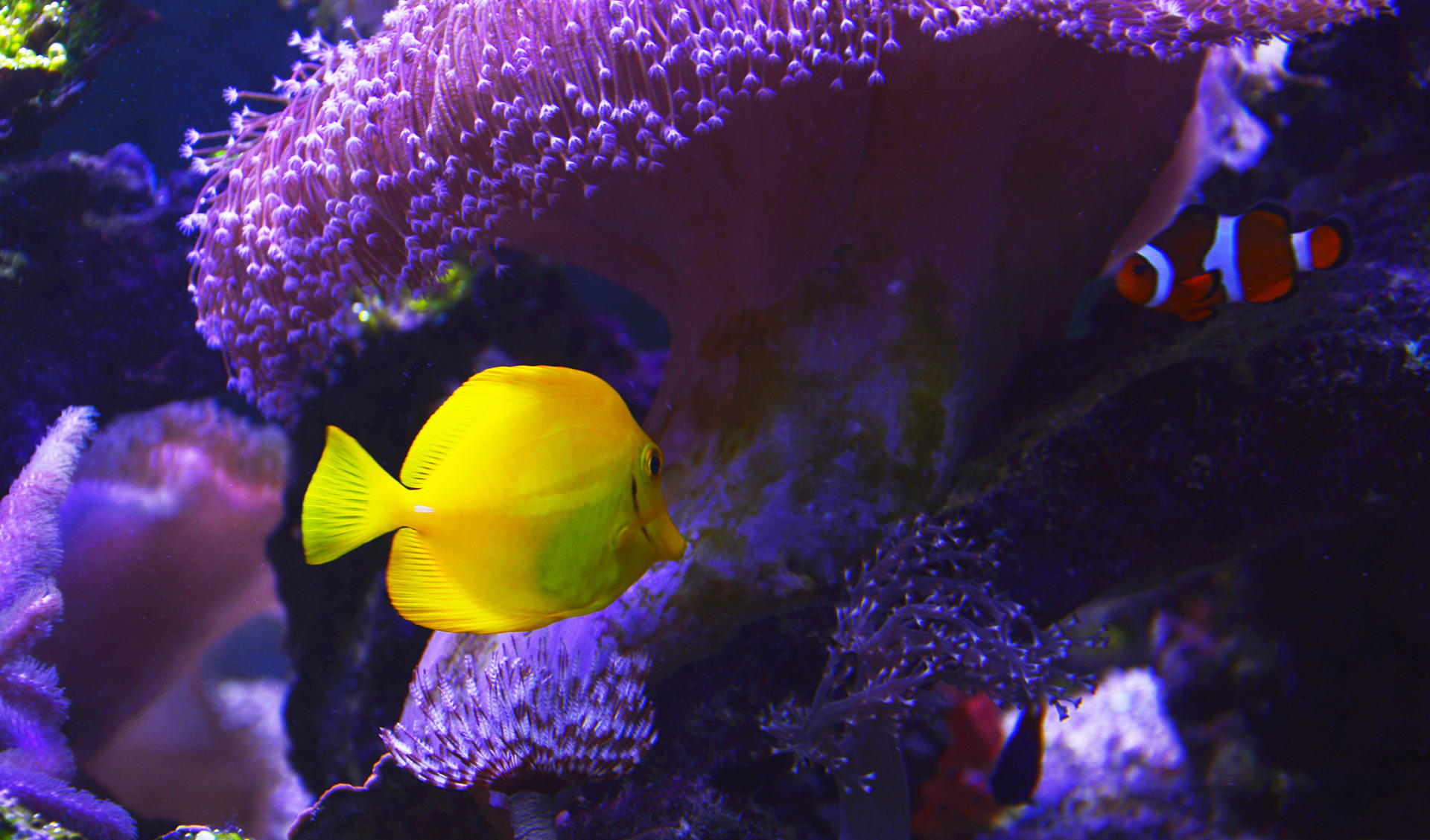 Coral Reef and Tropical Fish,colorful tropical fish