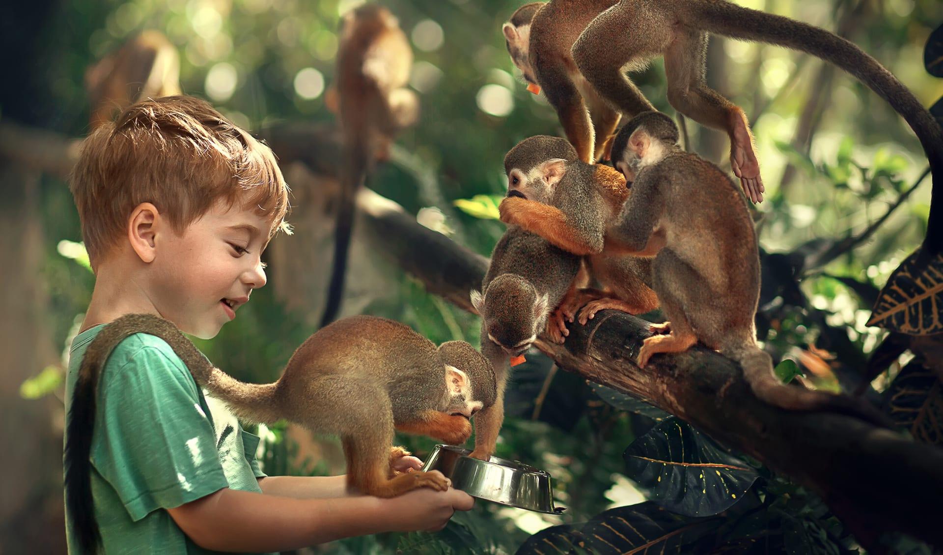 Cute kleine Junge ernährt Affen in der Dominikanischen Republik. Bild mit selektivem Fokus und Toning.
