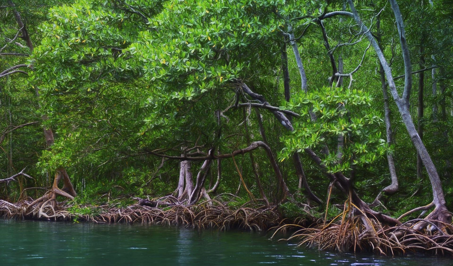 Mangrove, Los Haitises National Park, Bird Island, Dominican Republic, digital art, paint effect
