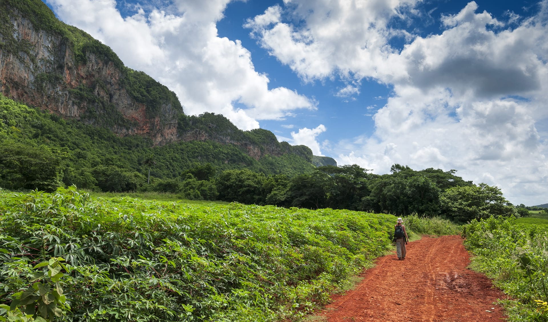 taking a walk in valley of Vinales park,Cuba