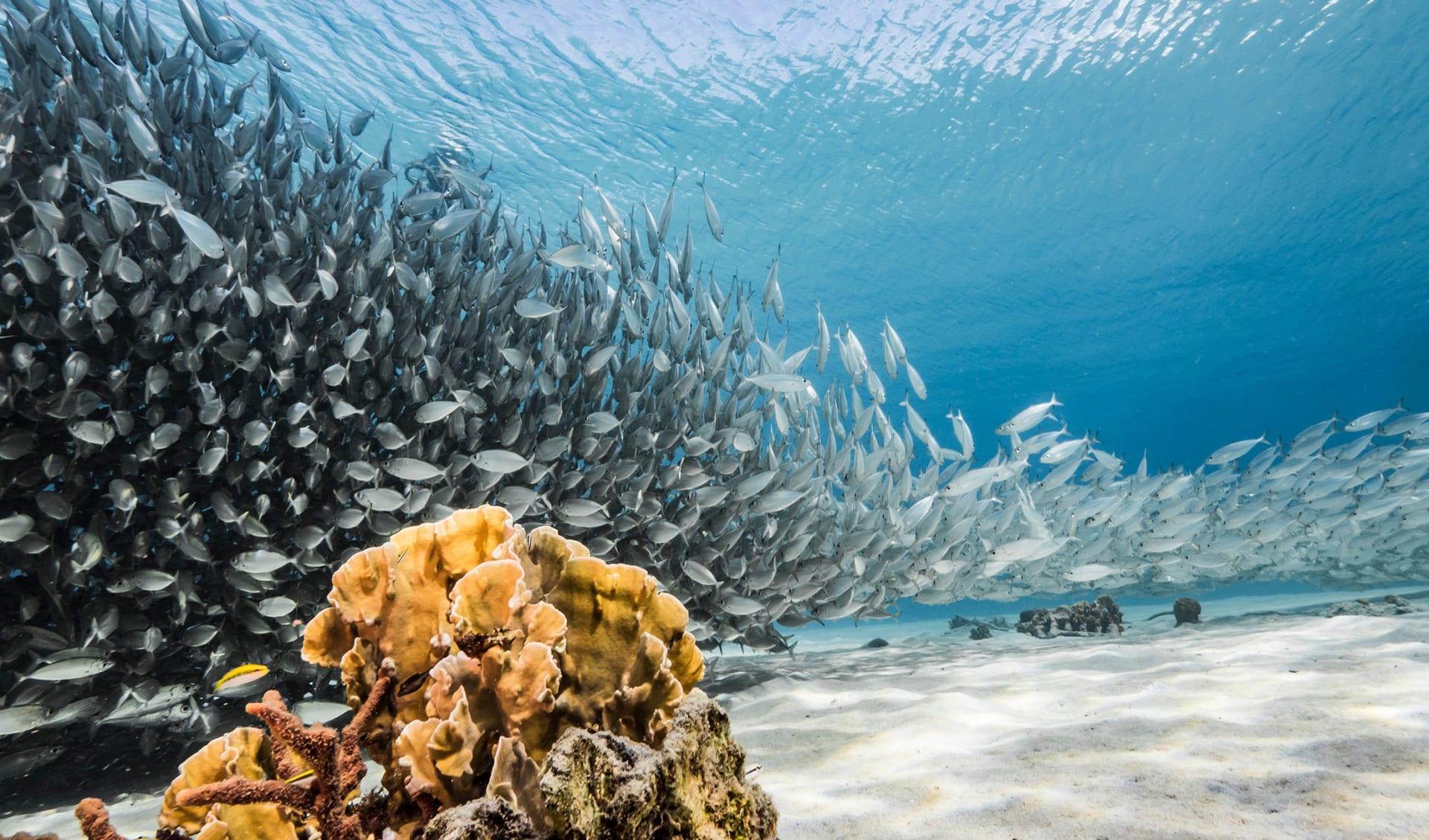 Tauchen, Karibik