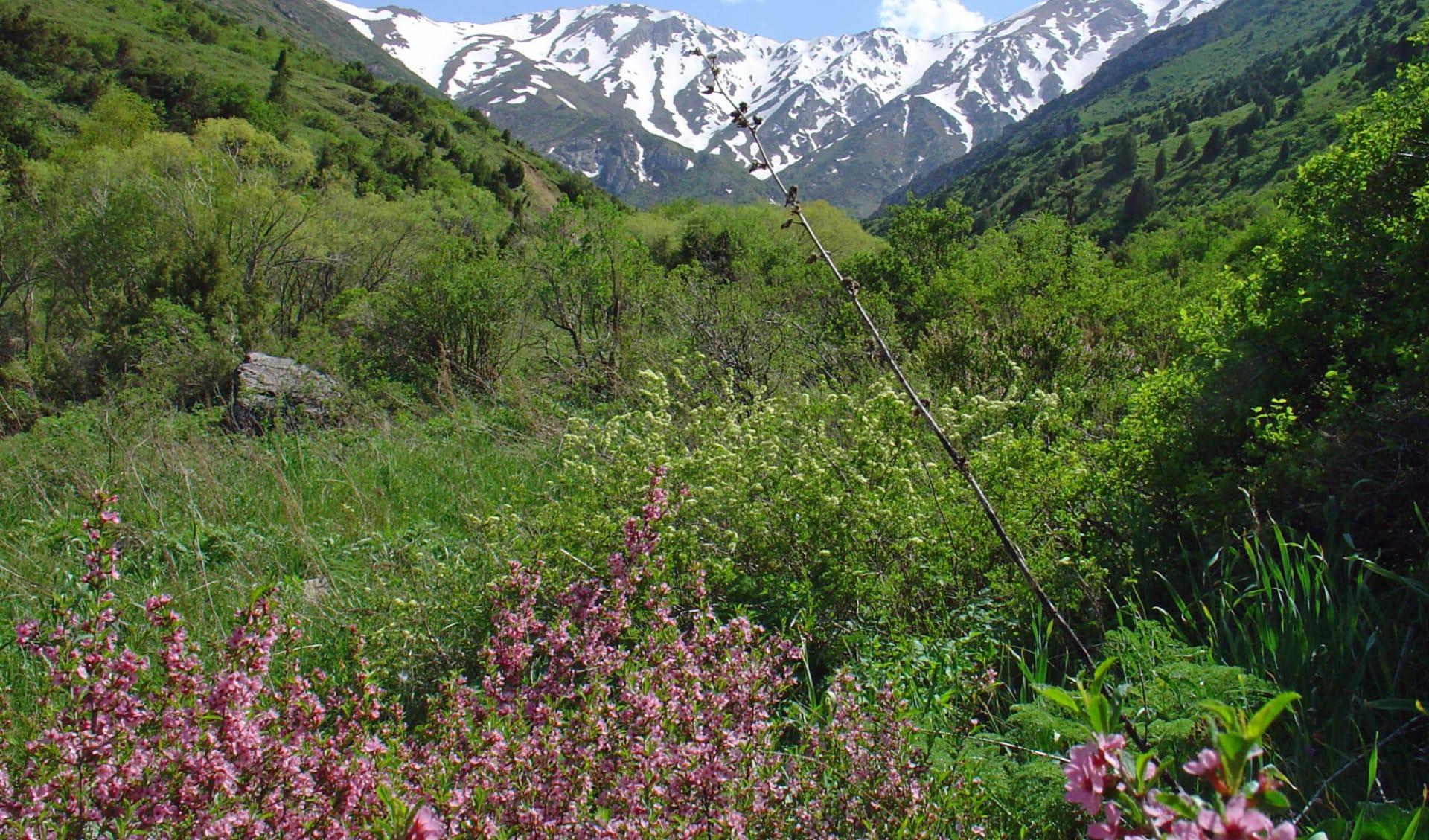 OSRE Das grosse Seidenstrassen-Abenteuer ab Almaty: Kasachstan - Landschaft