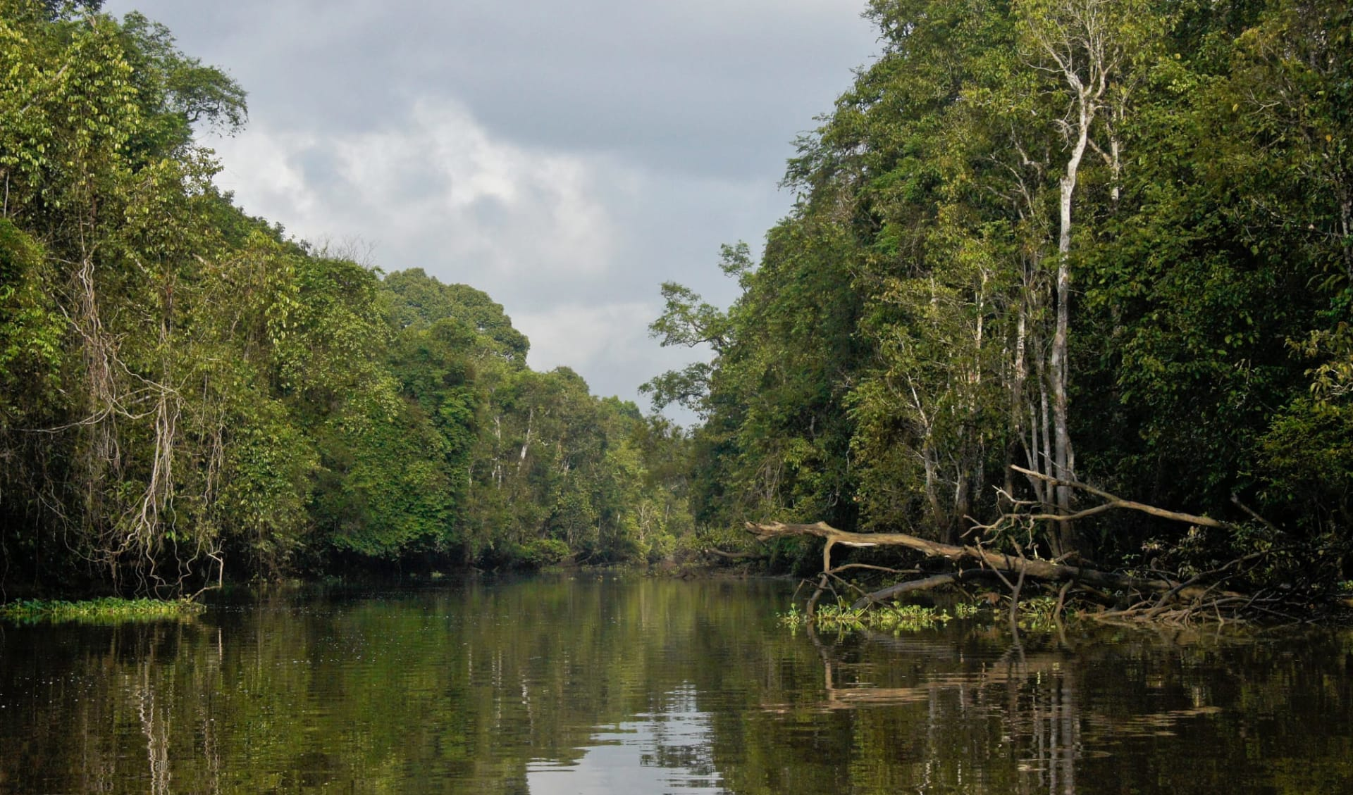 Borneo Wildlife / Borneo Rainforest Lodge ab Kota Kinabalu: Kinabatangan River