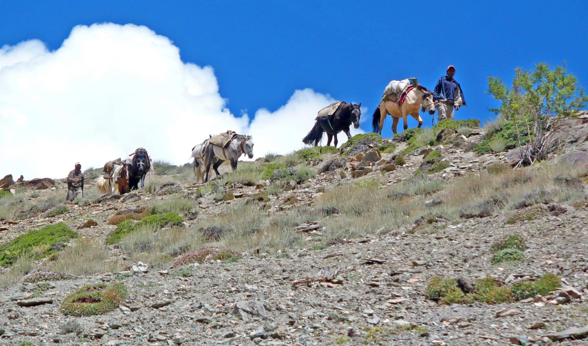 Die spektakuläre Bergwelt von Ladakh ab Leh: Ladakh: two men with horses