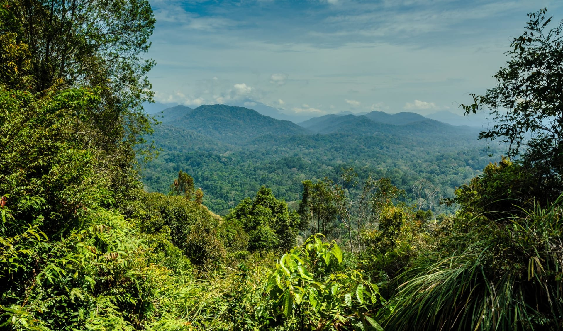 Taman Negara Nationalpark ab Kuala Lumpur: Malaysia Taman Negara