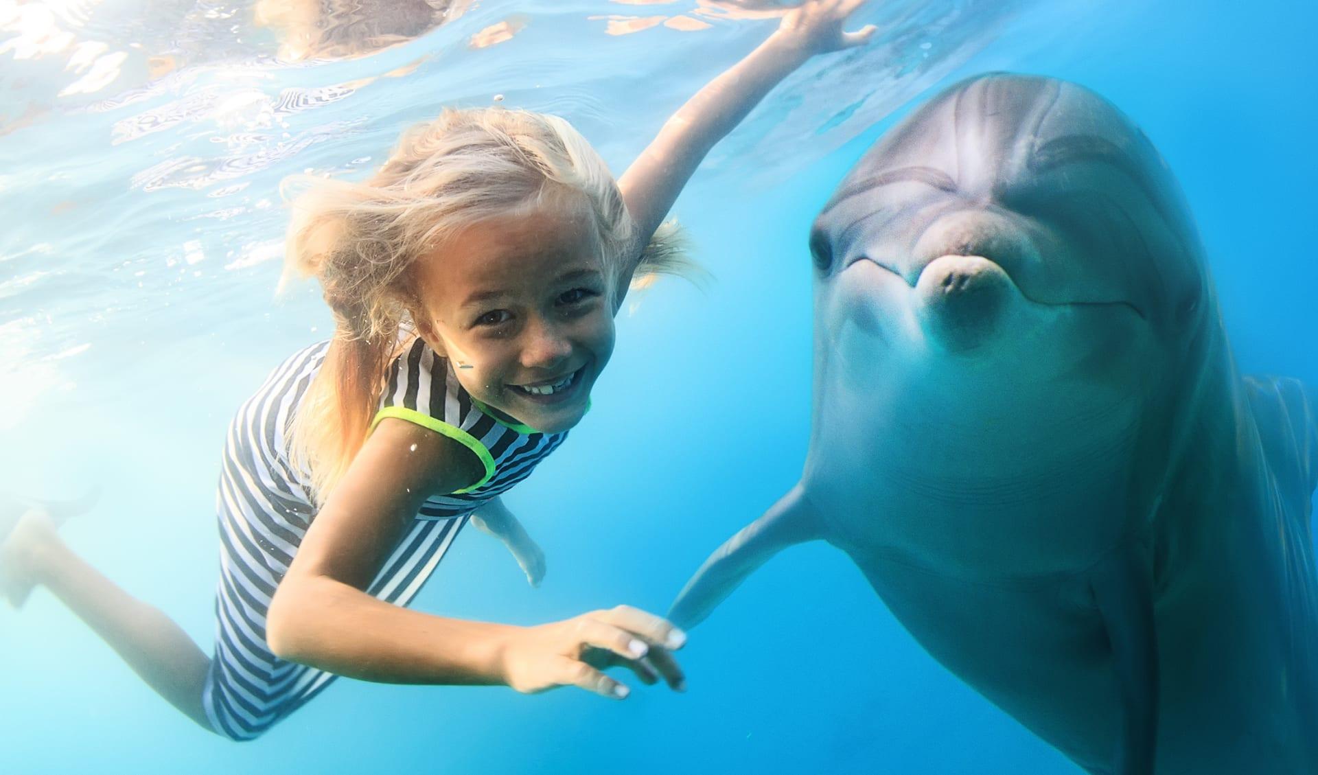 Delphine im Ozean, Malediven