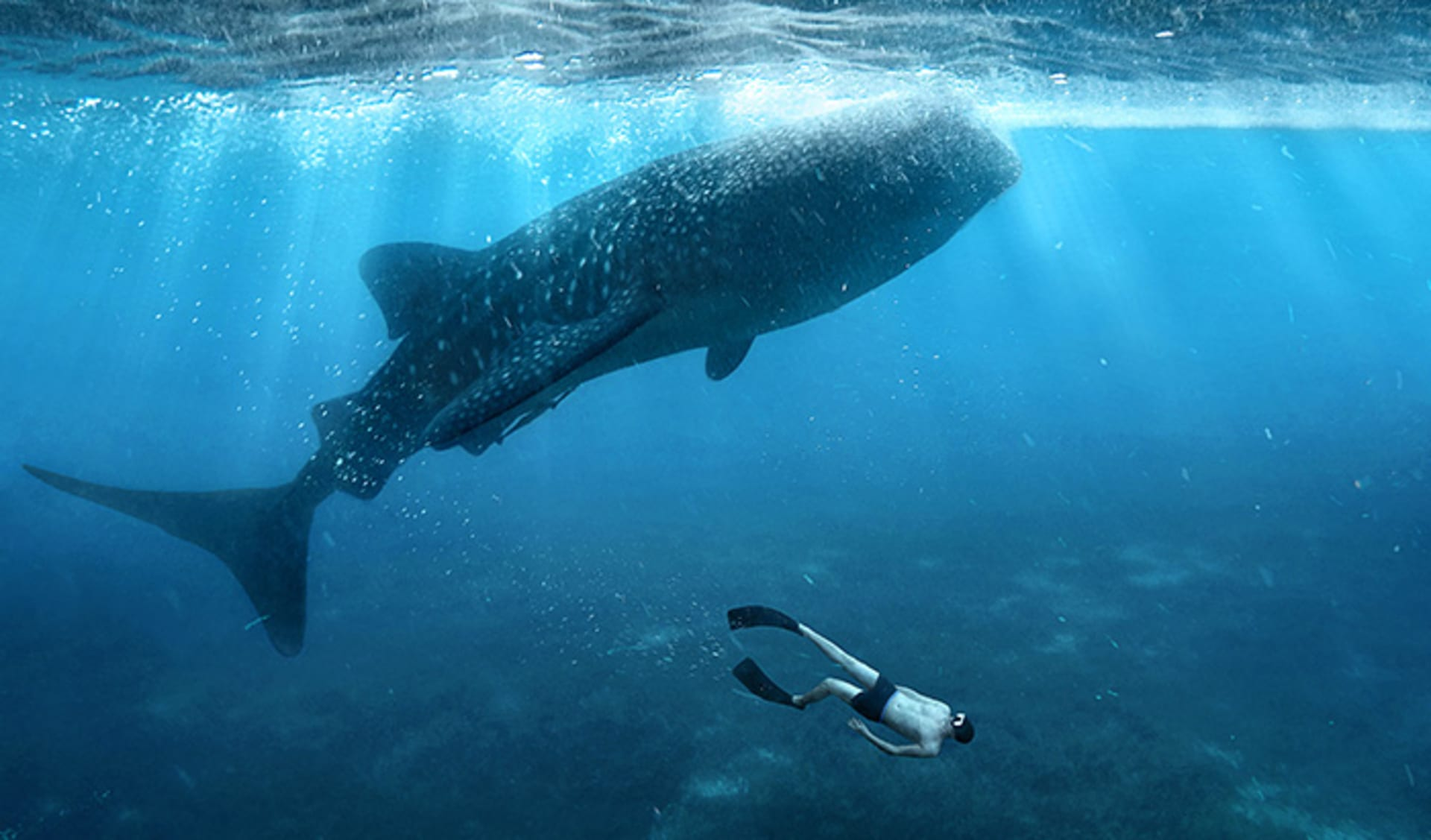 Walhai, Philippinen