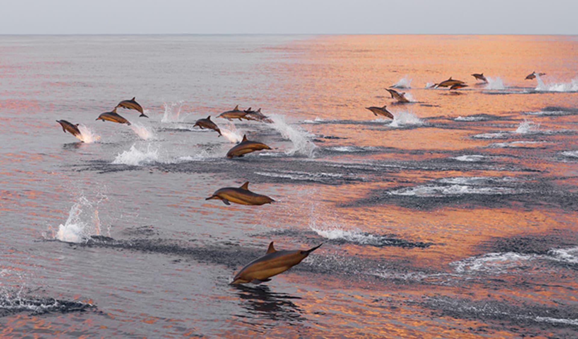 Sunset Cruise, Malediven