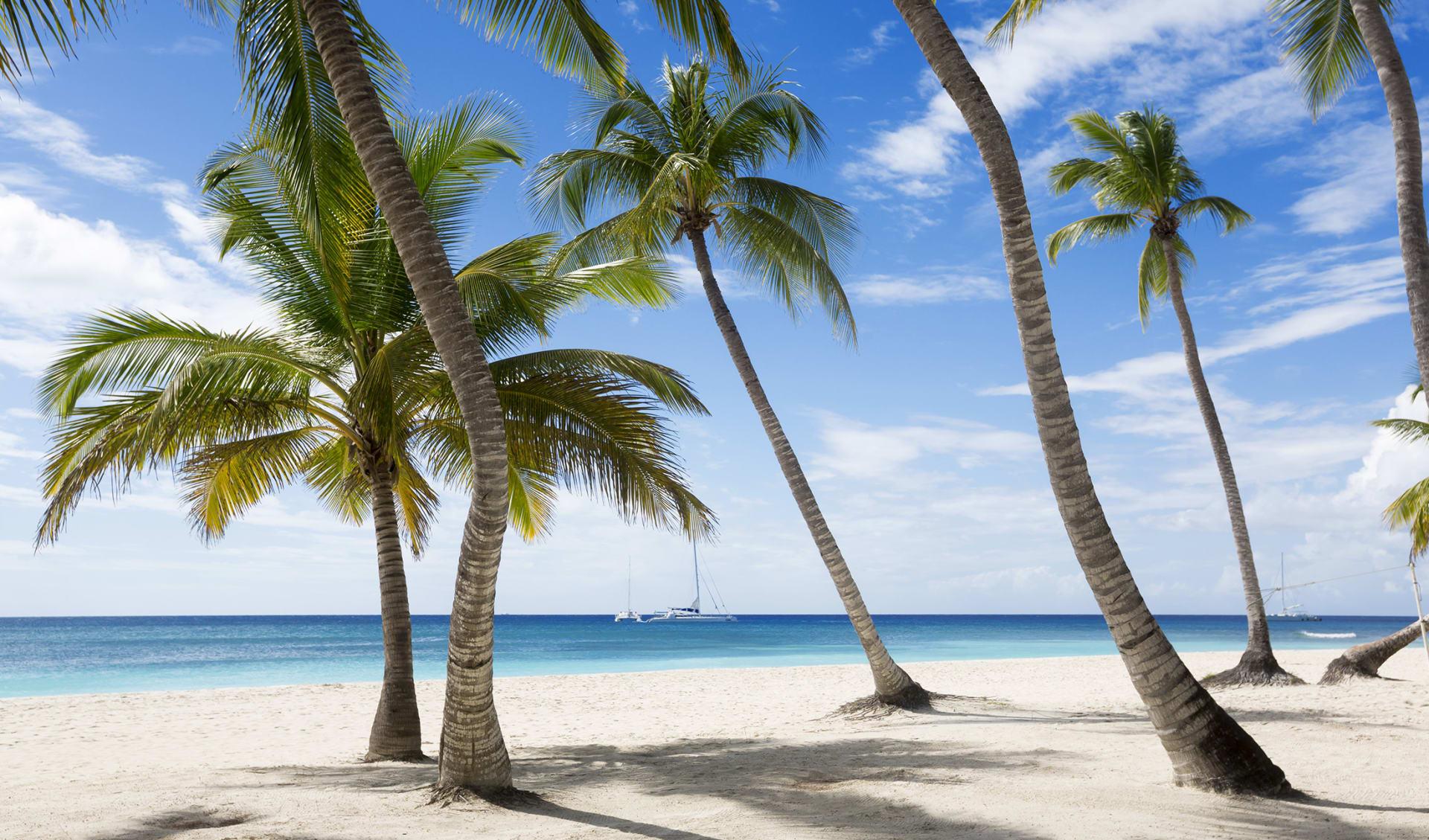 Strand und Palmen, Mauritius