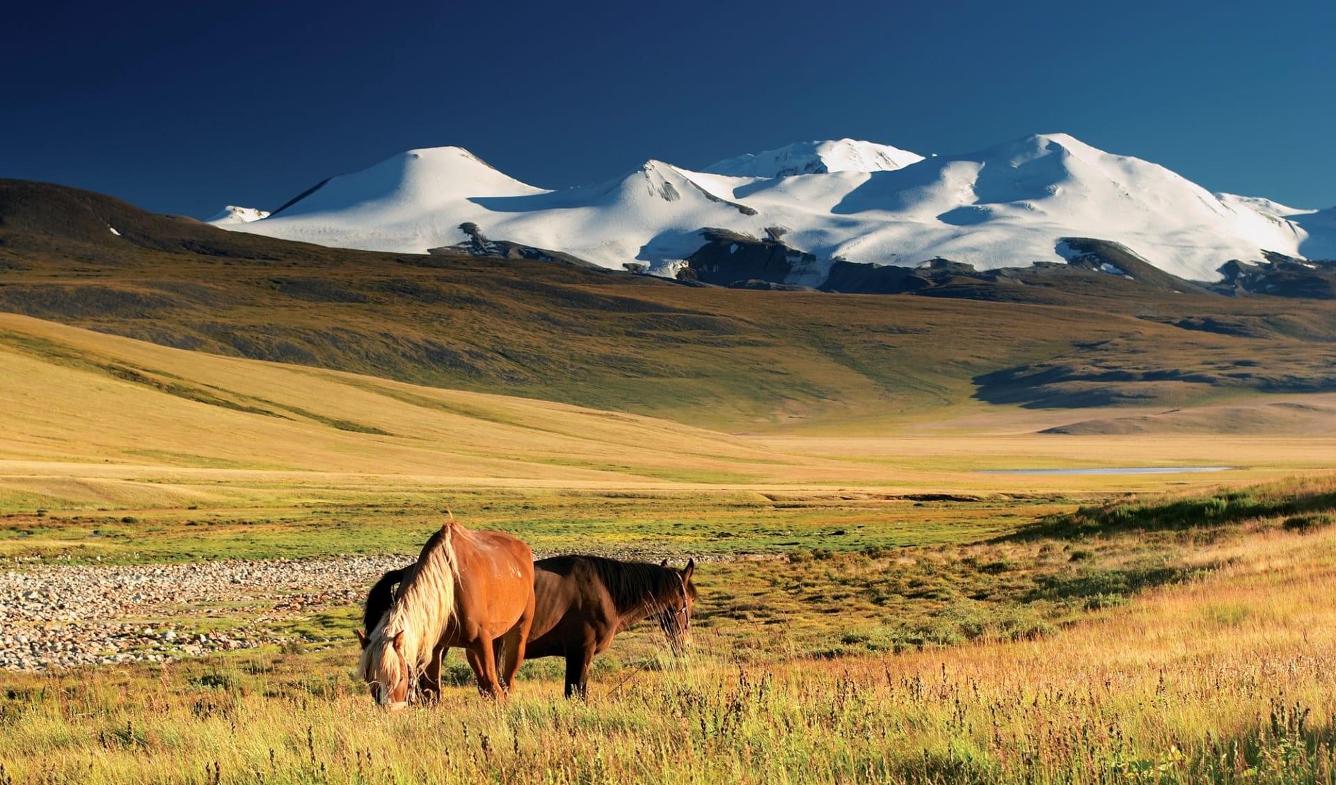 Hauptstadt des Dschingis Khan ab Ulaanbaatar: Mongolei_Wildpferde_