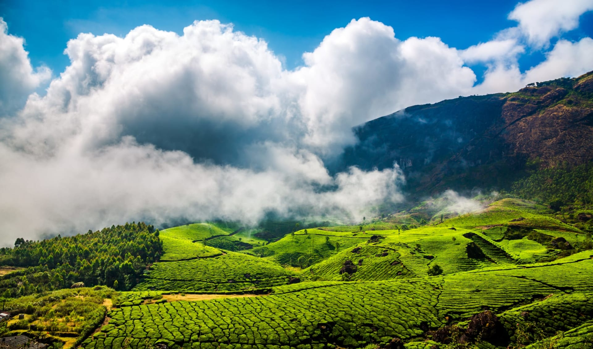 Naturschönheiten Keralas ab Kochi: Munnar Tea Plantation