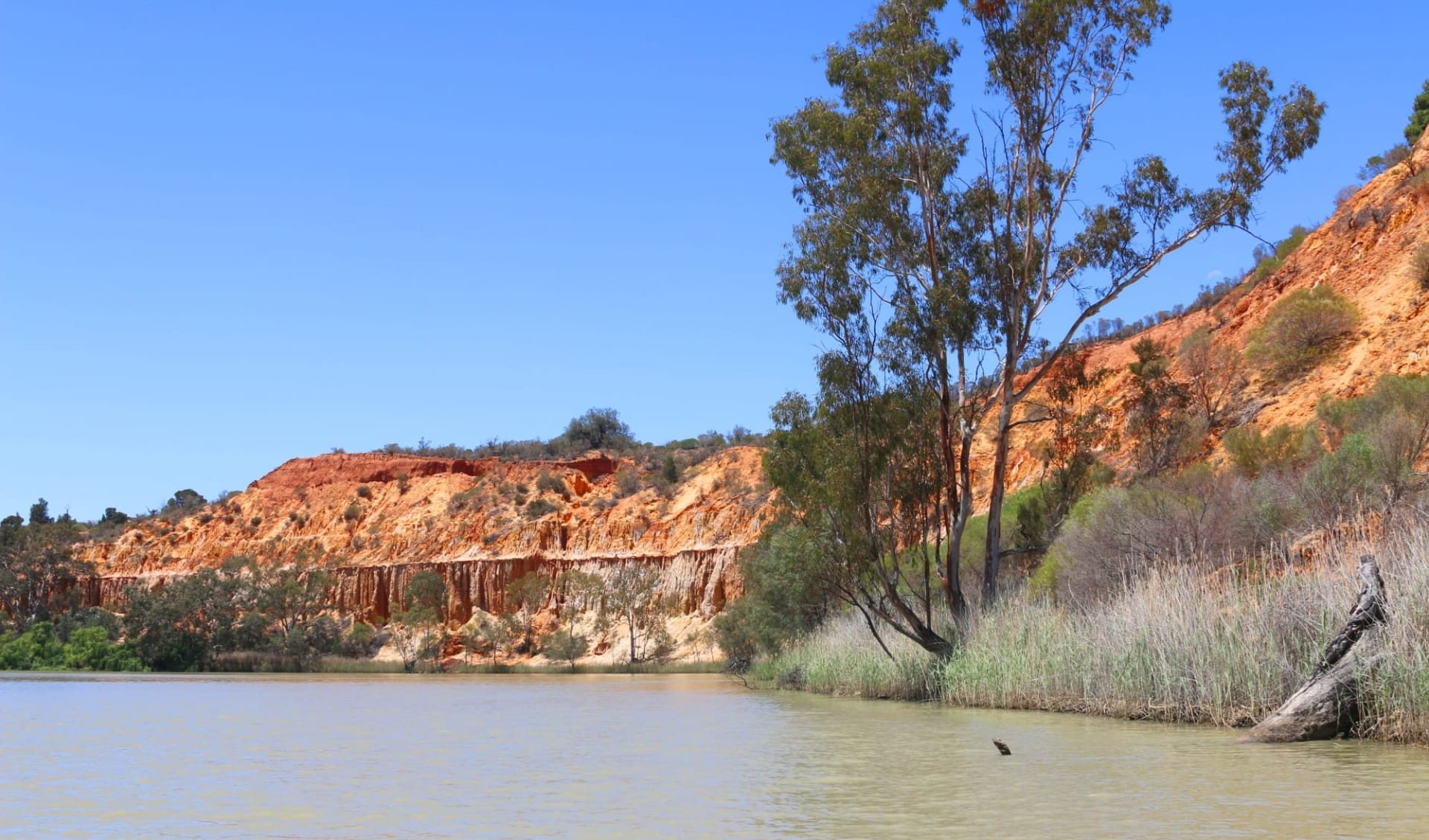 Murray River Walk ab Renmark: Murray River - Murray Cliff