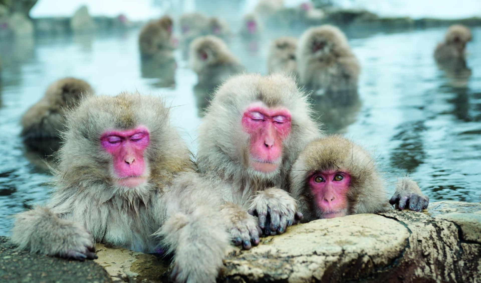 Das Land der aufgehenden Sonne ab Tokio: Nagano: Snow Monkeys