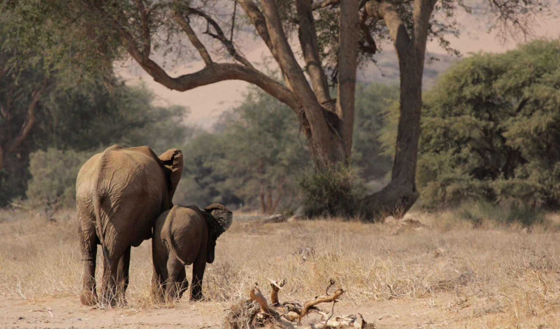 Die Weiten Namibias ab Windhoek Stadt: Damaraland