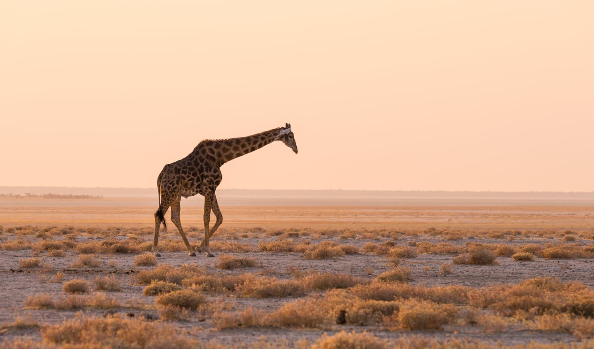 Visions Australes ab Windhoek Stadt: Etosha Nationalpark