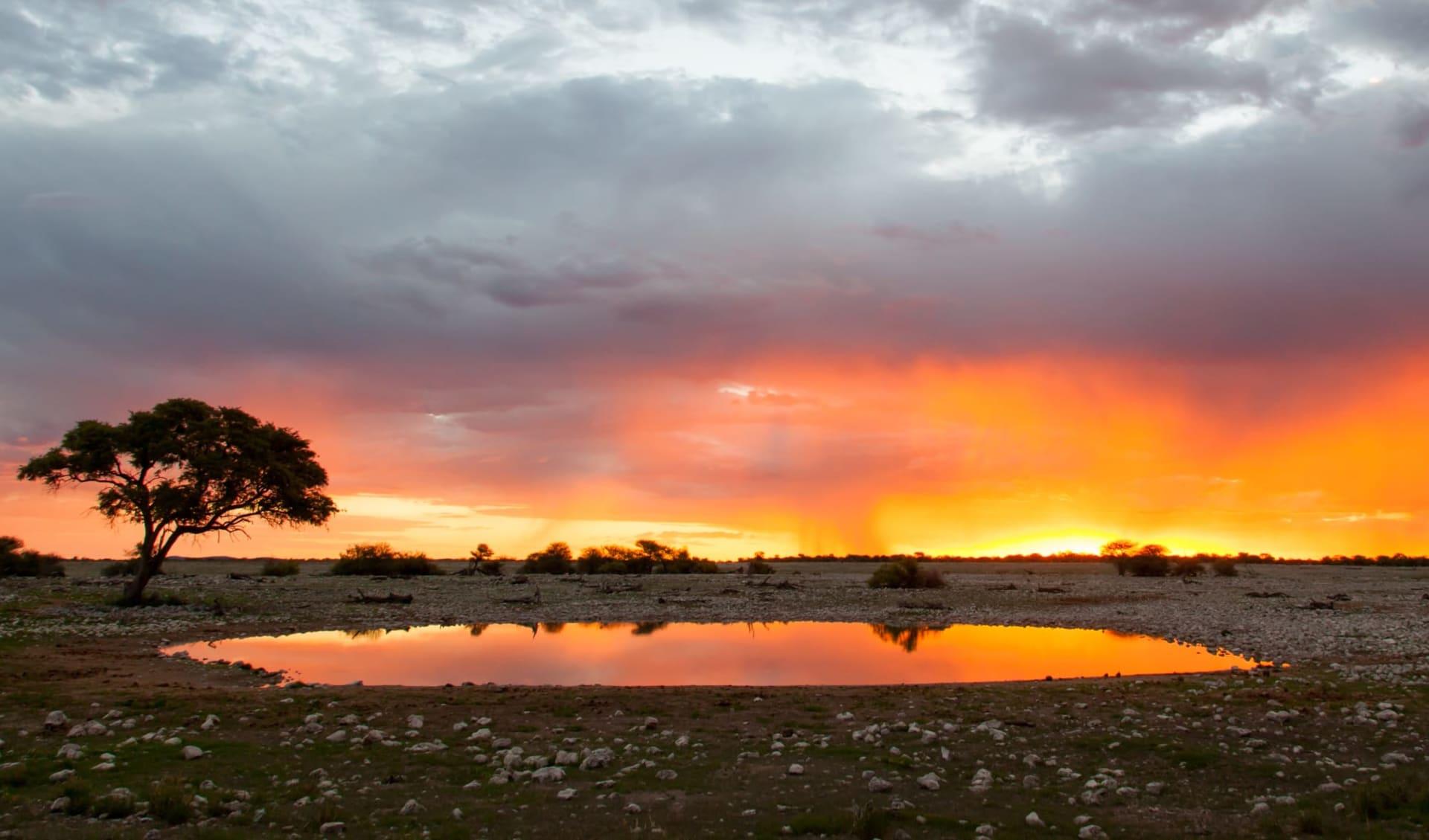 Namibia Klassiker 13 Tage ab Windhoek Stadt: Etosha Nationalpark
