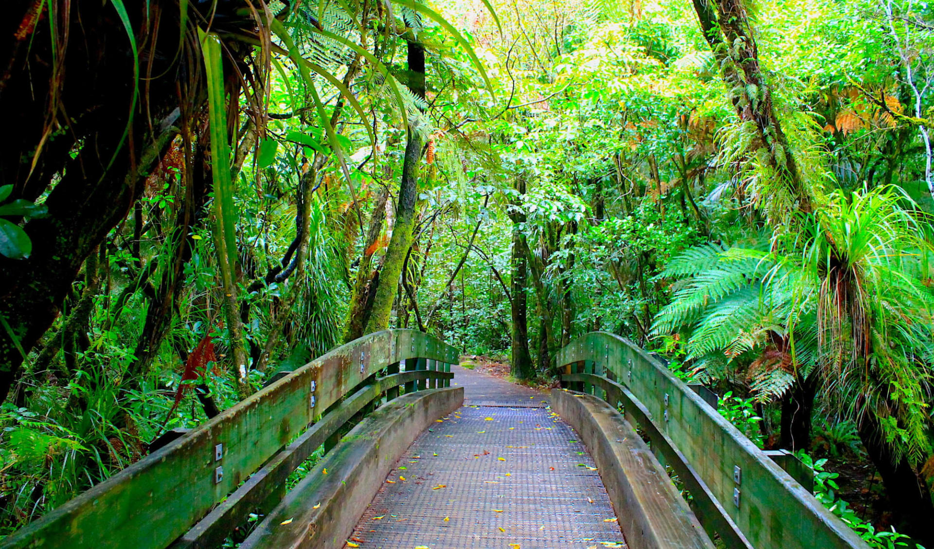 Aotea Track Package ab Auckland: Neuseeland - Kauri Forest
