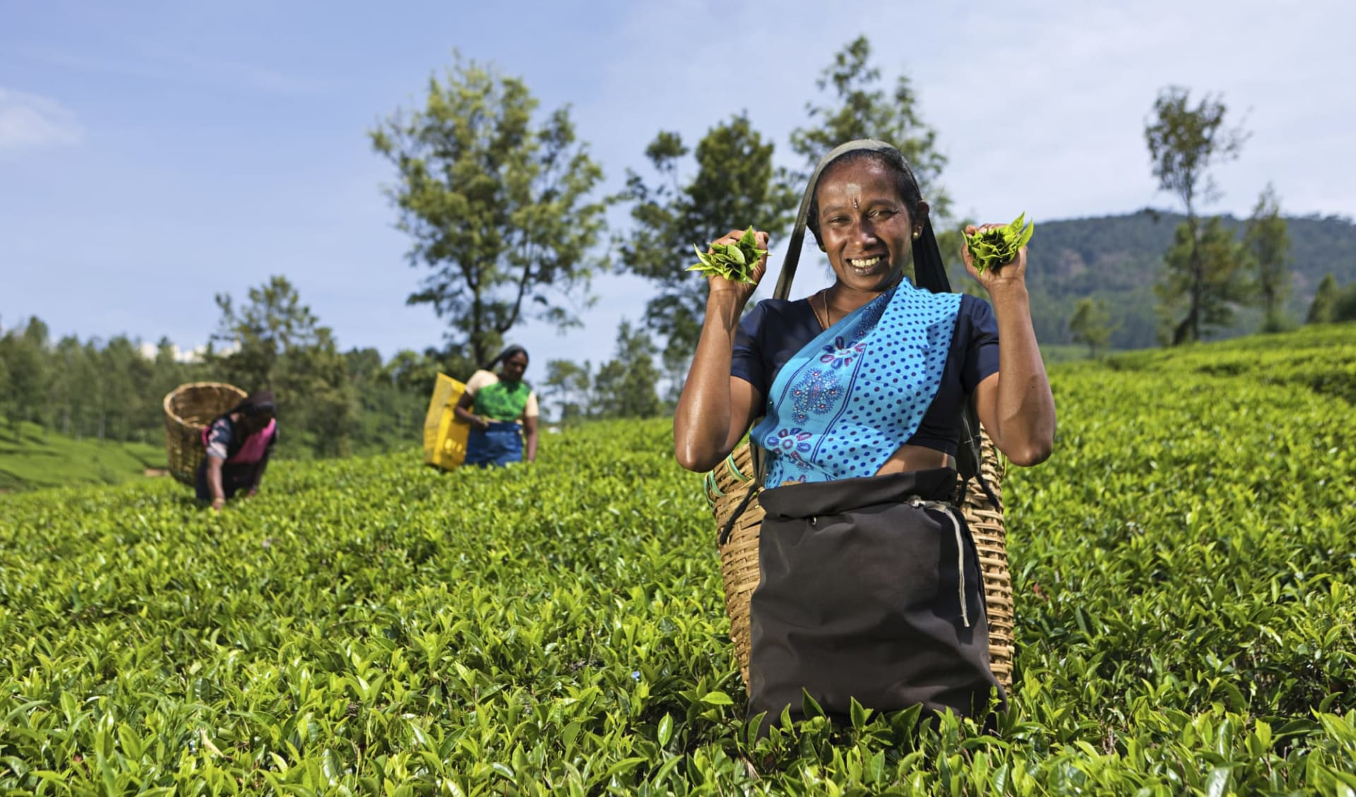 Sri Lanka für Geniesser ab Colombo: Nuwara Eliya Tea plucking women