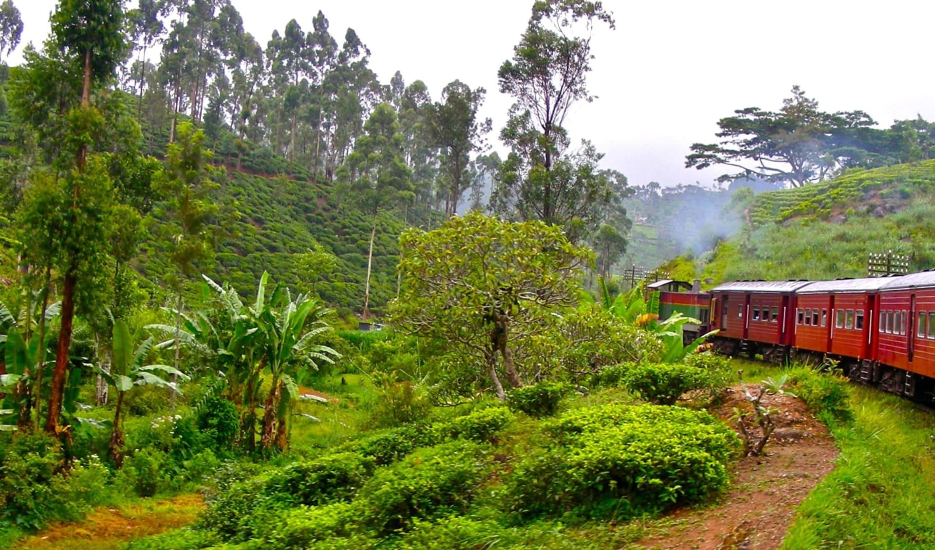 Höhepunkte Sri Lankas ab Colombo: Nuwara Eliya train ride
