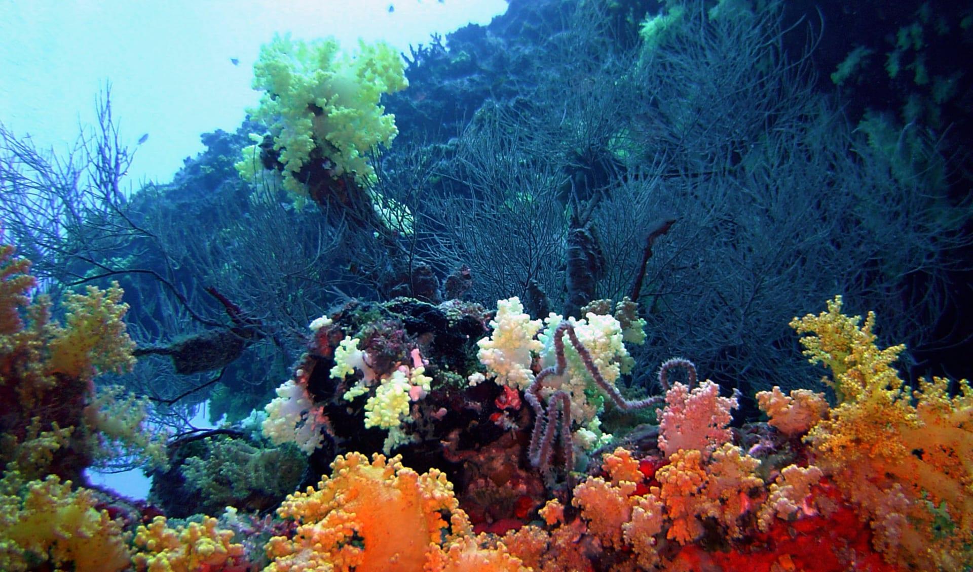 Aveyla Manta Village in Dharavandhoo: Reef