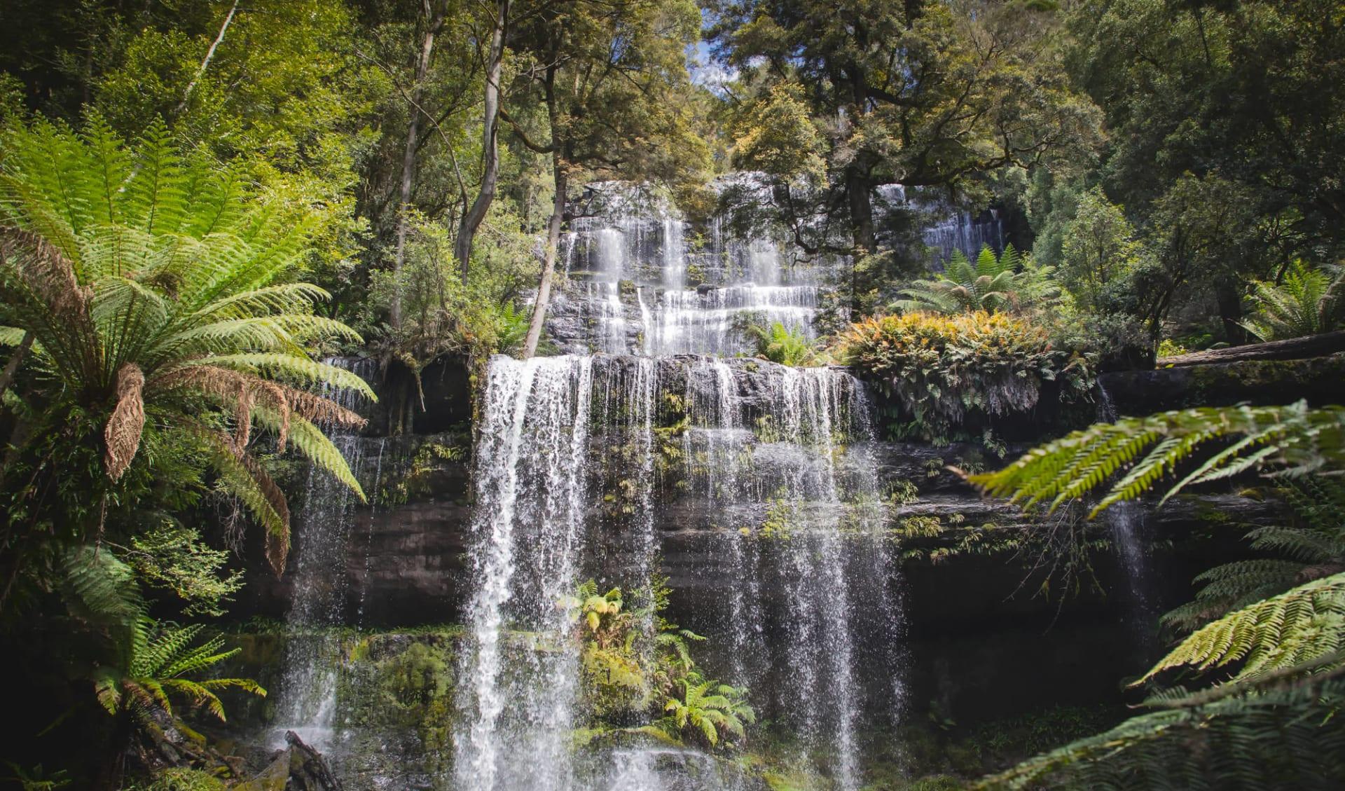 Tasmania Hike & Drive ab Hobart: Russell Falls