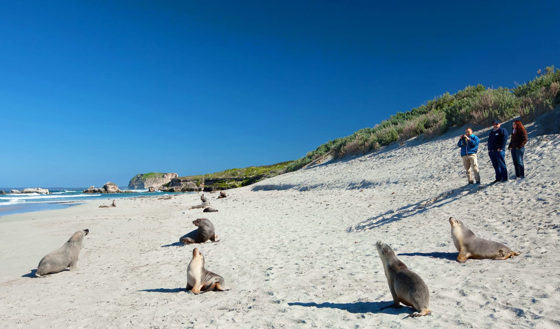 Nature Tour ab Adelaide: Seal Bay - Seehunde am Strand