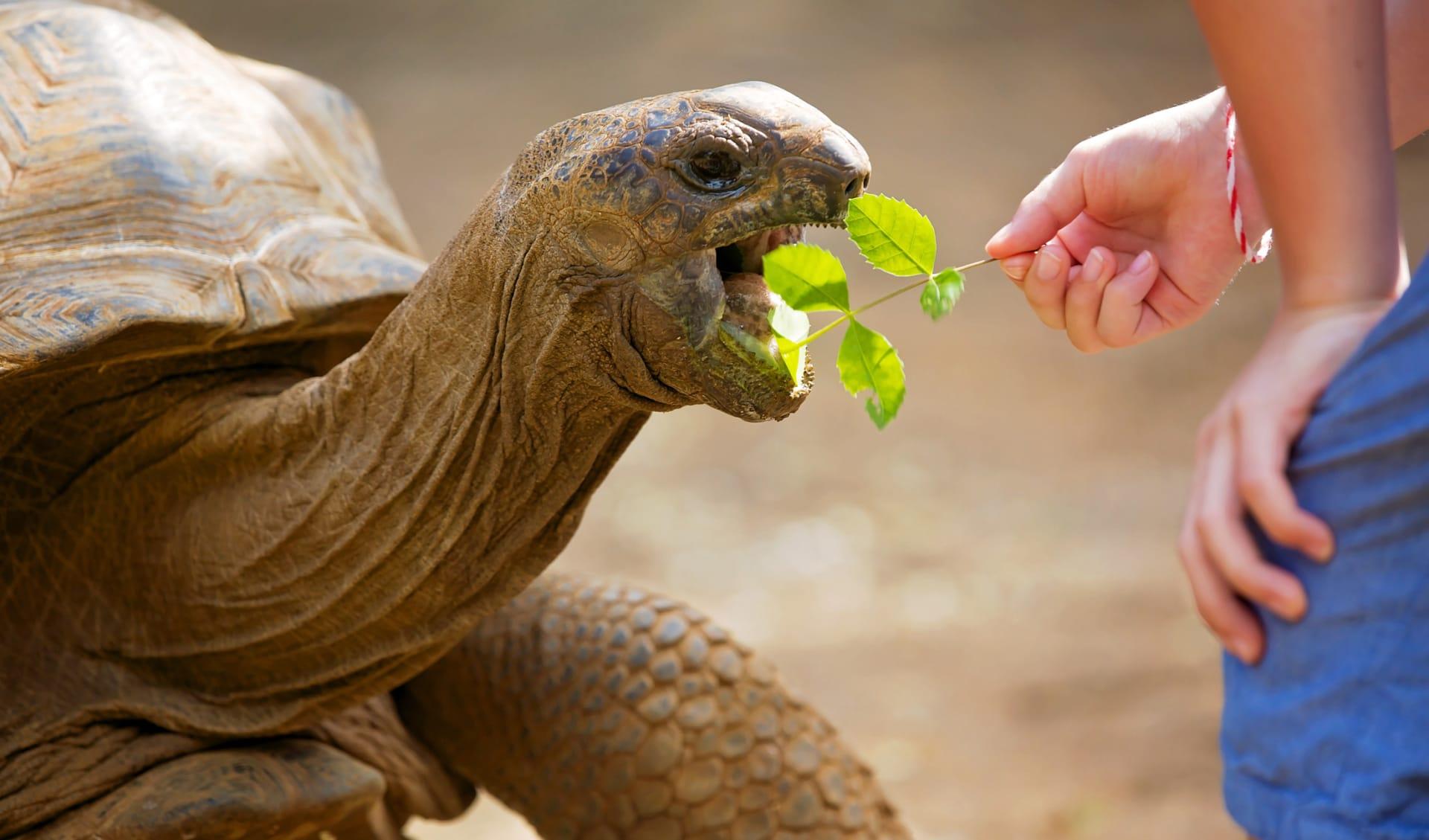 Big turtle and happy kids, Seychelles
