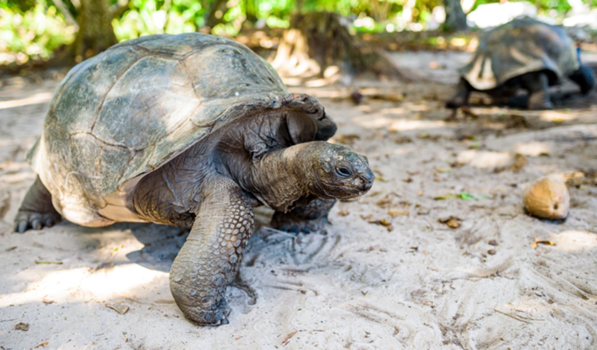 Denis Island, Seychellen