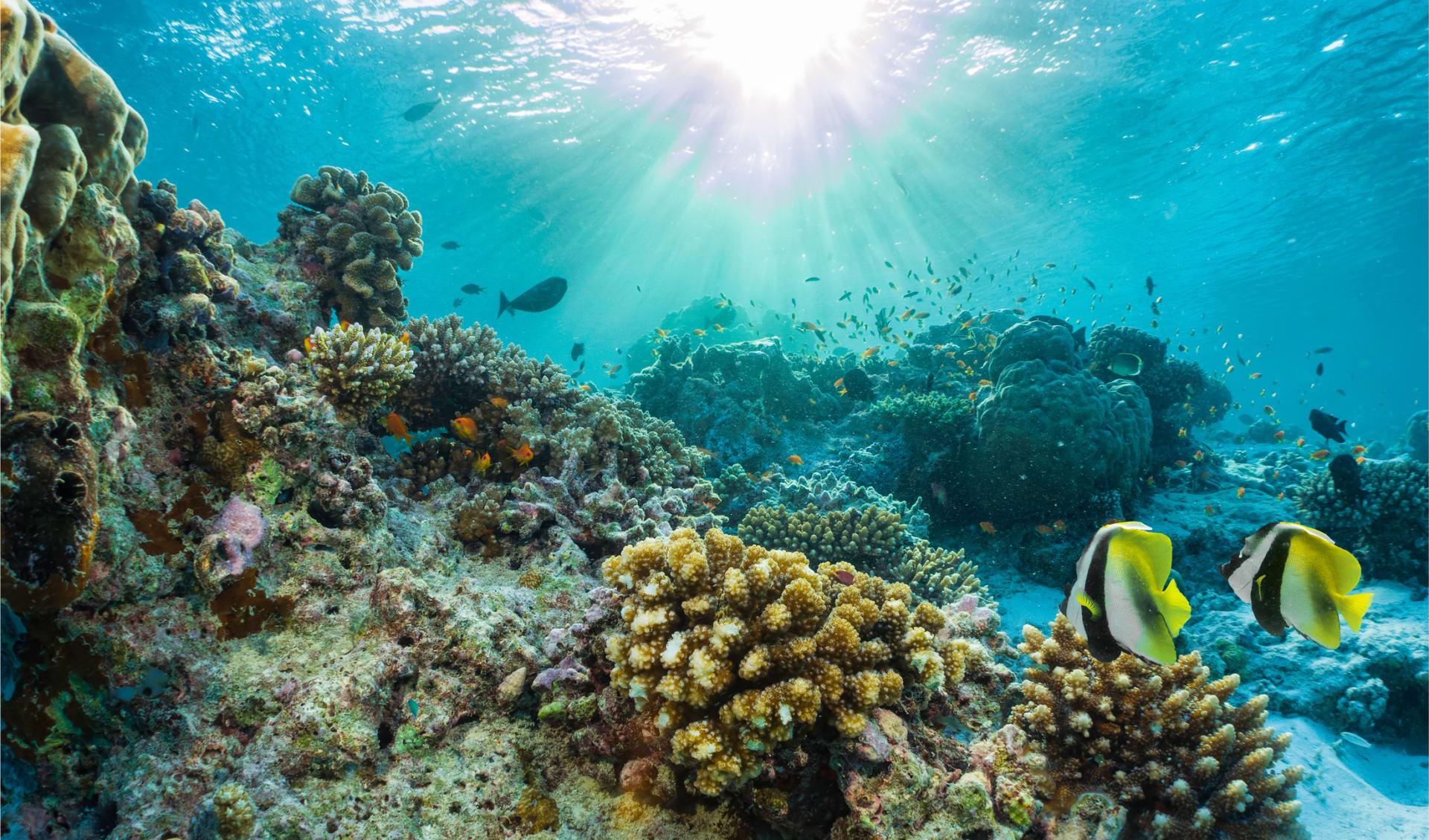 Schönes Korallenriff mit tropischen Fischen in den Seychellen