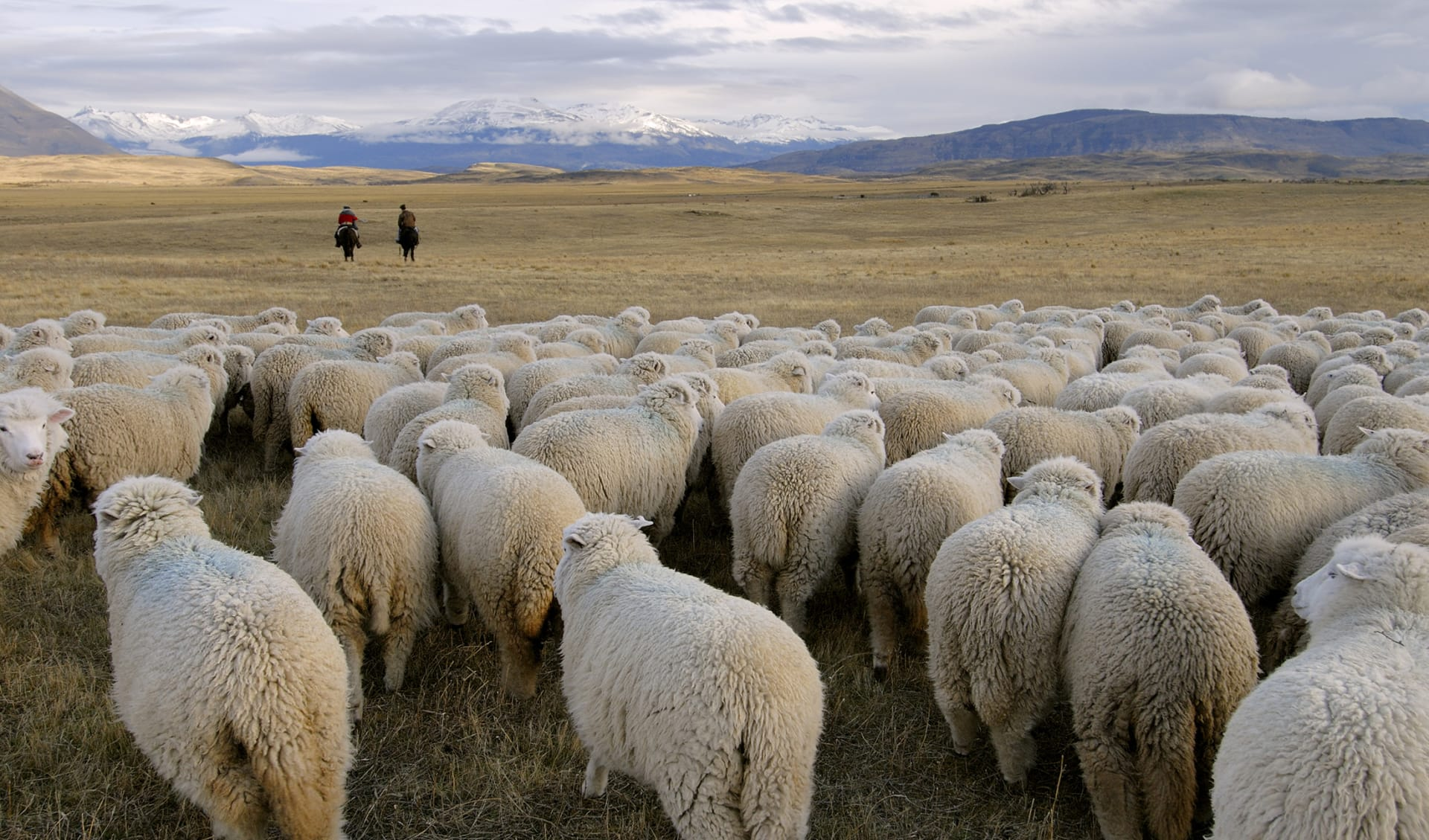Gauchos, Pampa, Argentinien