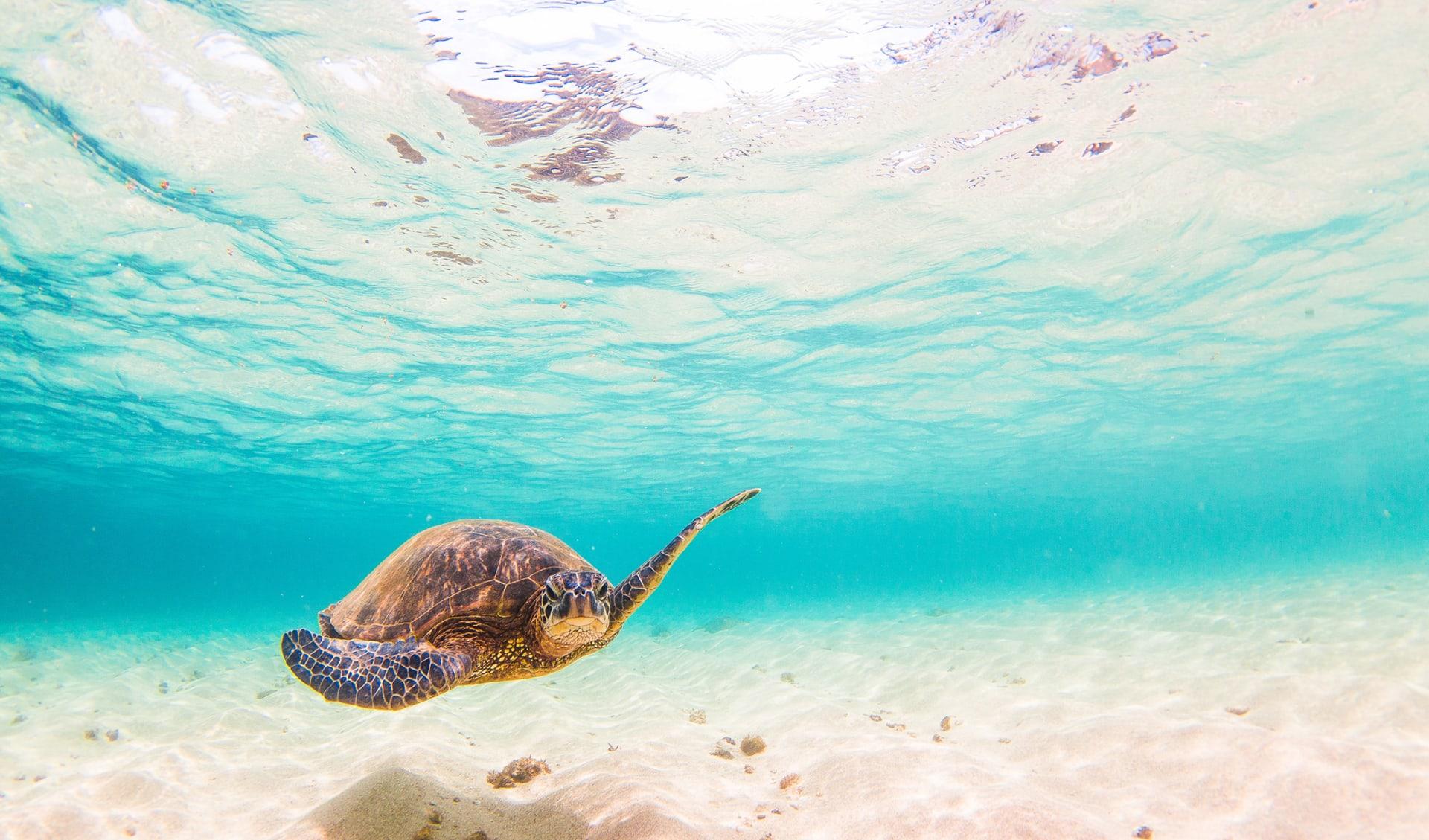 Unterwasserwelt, Korallenriff, Tauchen, Brasilien