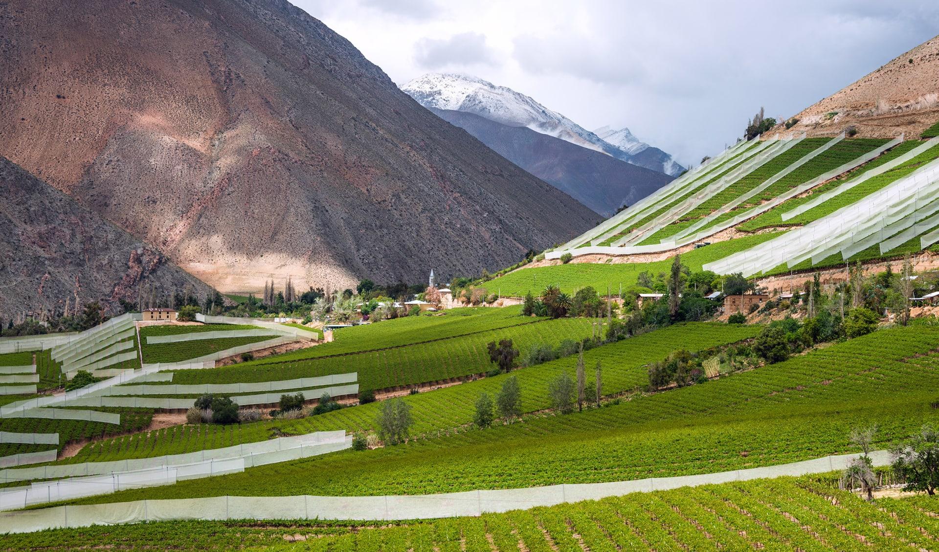 Elqui Tal, Weinregion, Chile