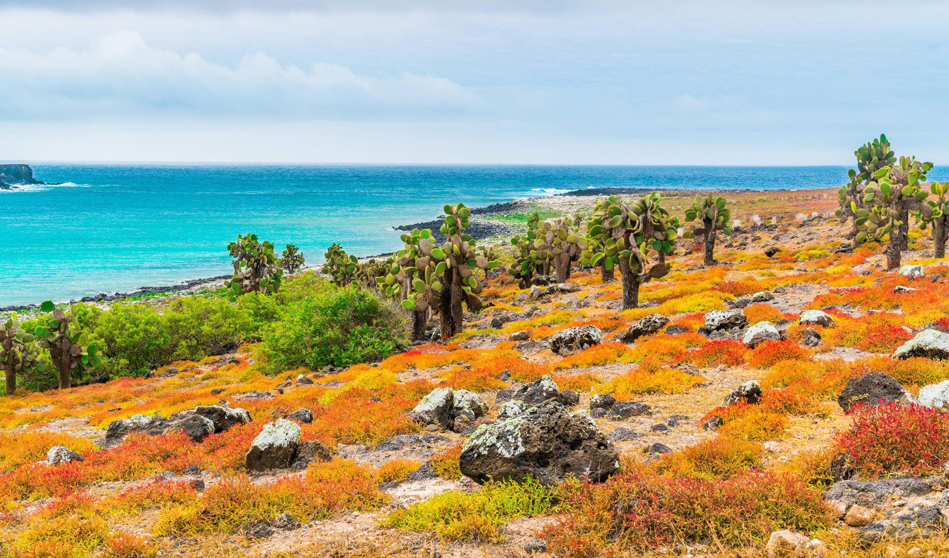 Flora und Fauna, Galapagos Inseln, Ecuador