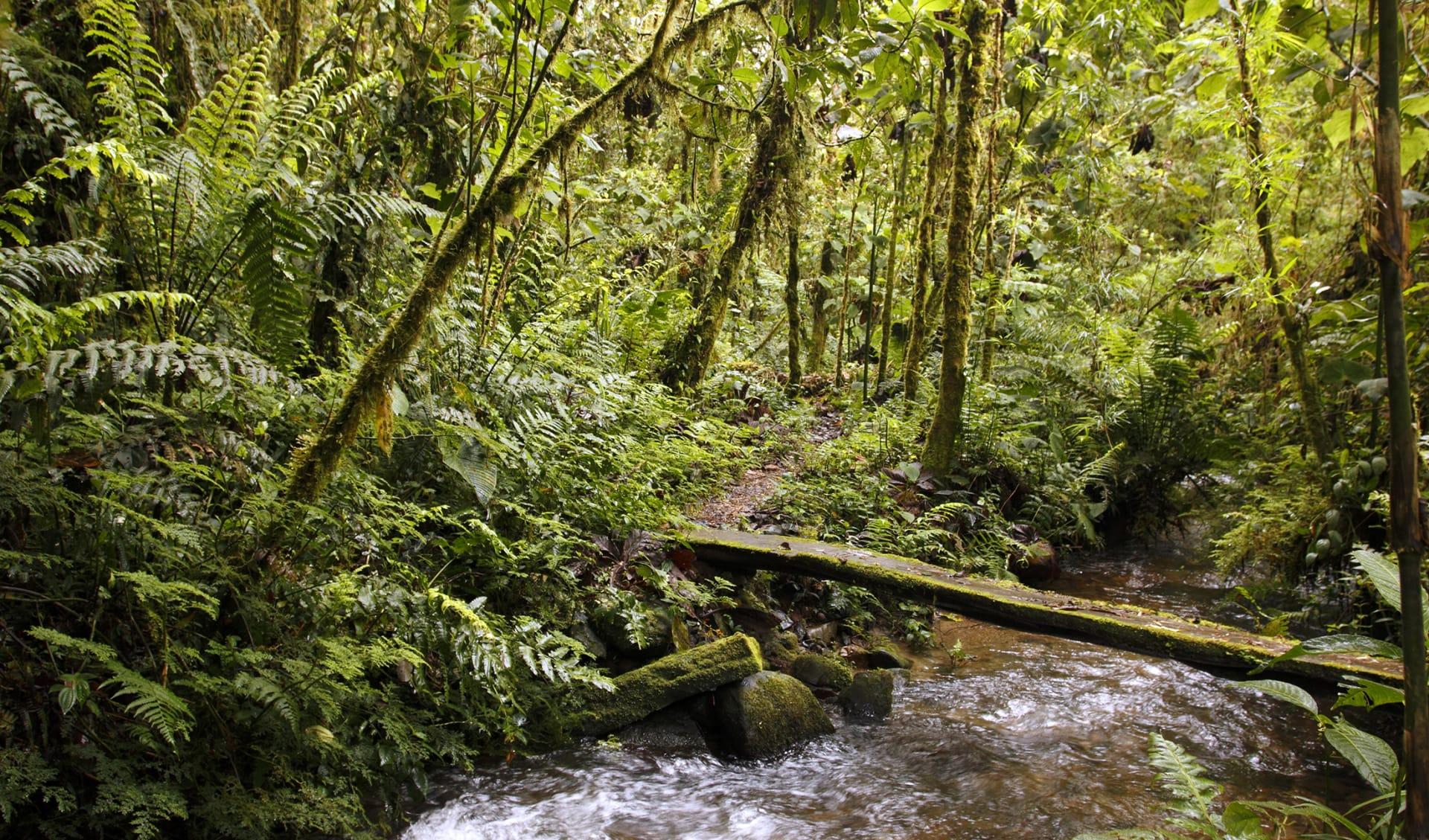 Regenwald, Peru