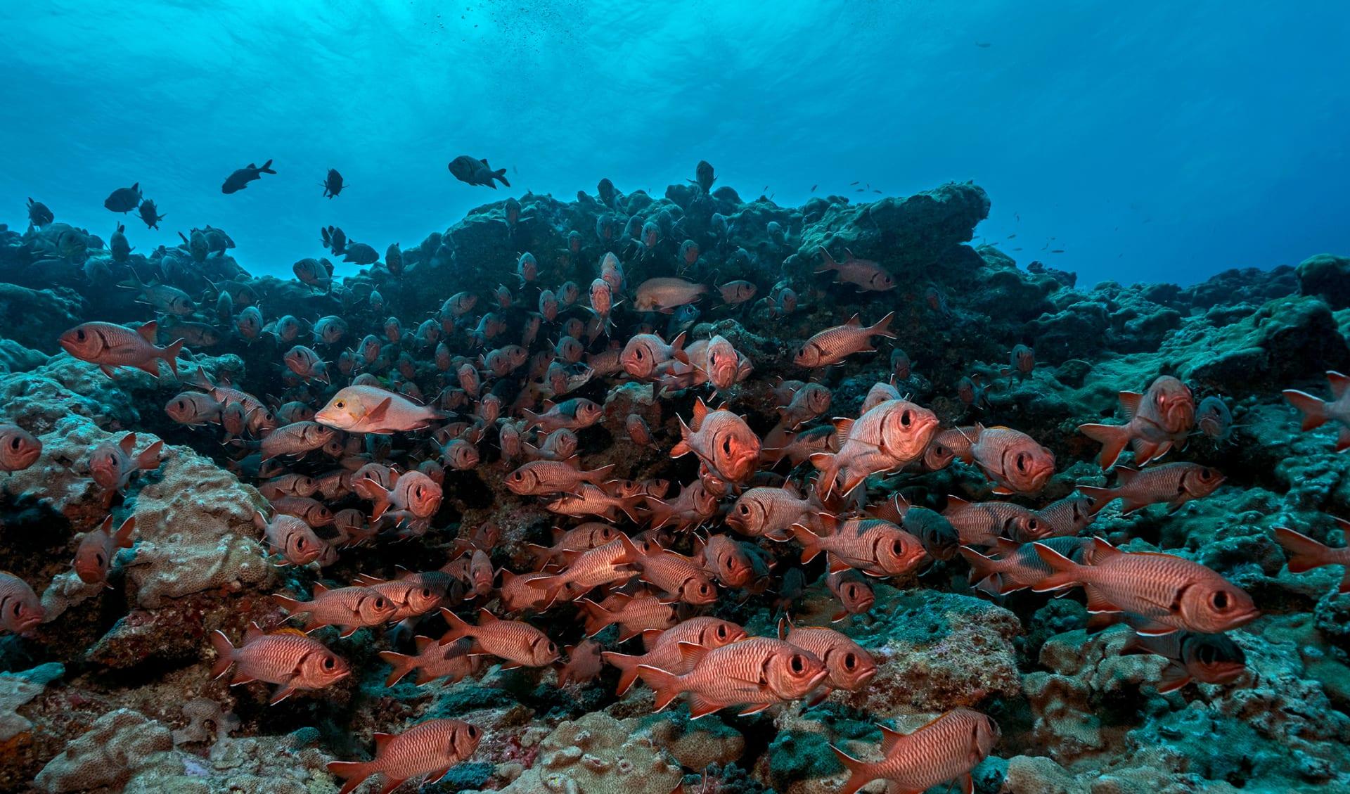 Fakarava Atoll, Französisch Polynesien