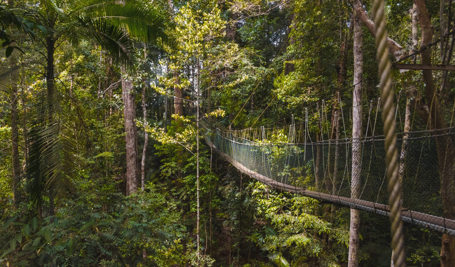 Taman Negara Nationalpark ab Kuala Lumpur: Taman Negara suspension bridge