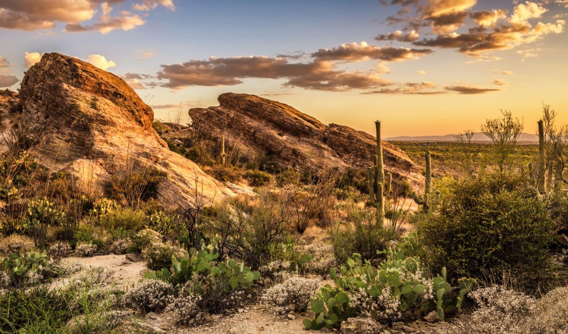 Spirit of the Southwest ab Phoenix: USA - Arizona - Javelina Rocks at Saguaro National Park