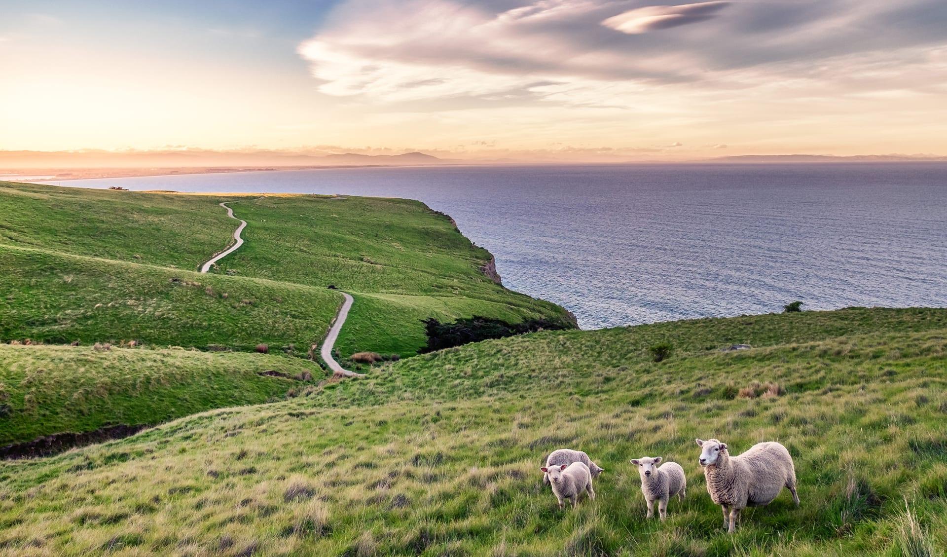 Australien & Neuseeland Kreuzfahrten