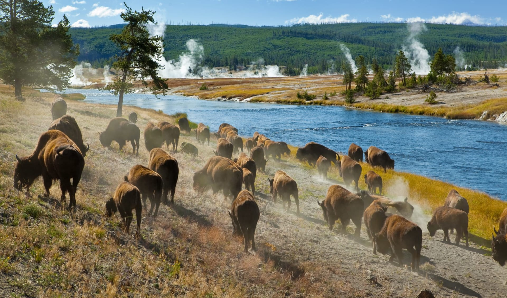 Rocky Mountain Frontiers ab Denver: Yellowstone Nationalpark