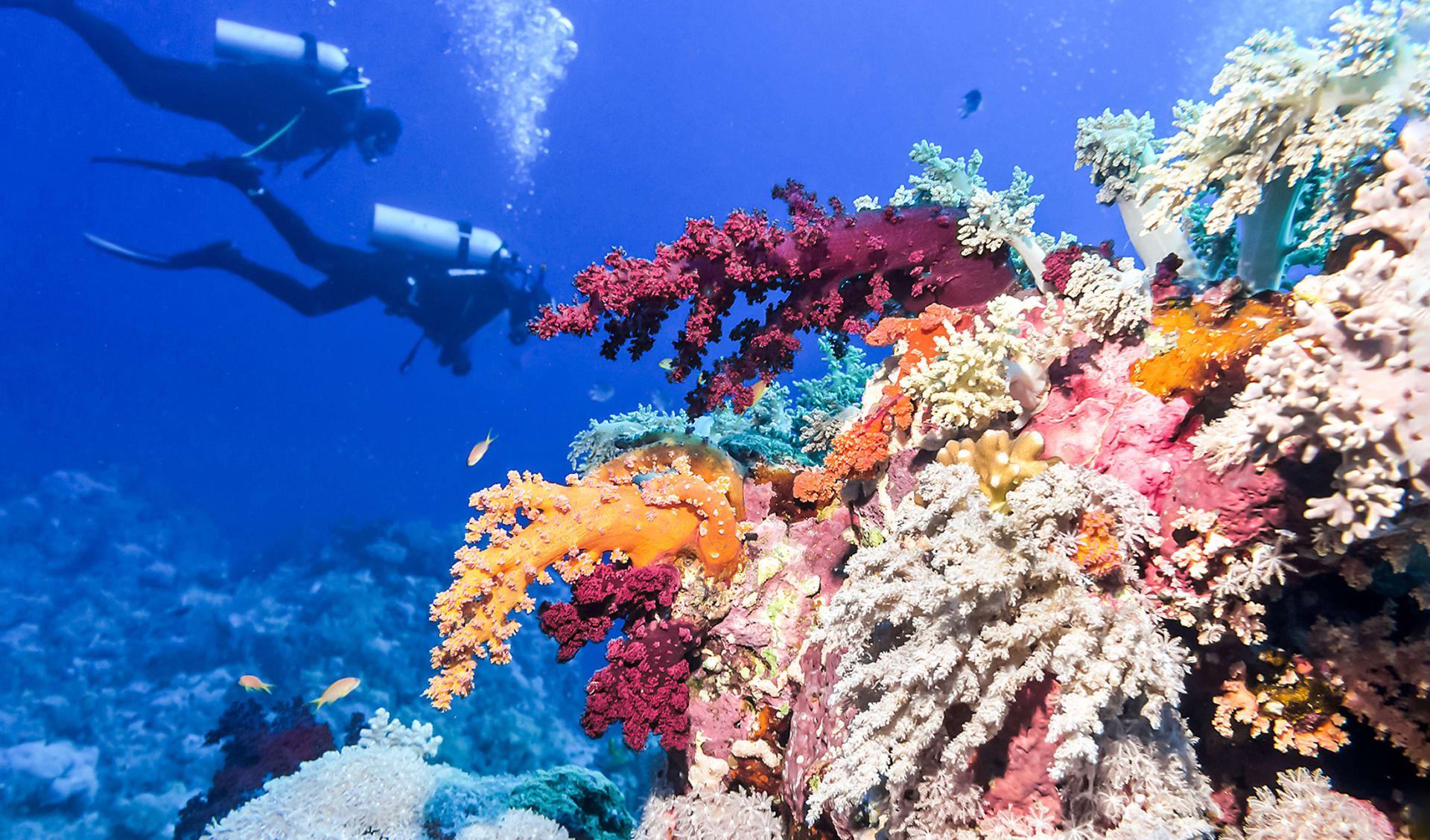 Grosses Riff, Belize