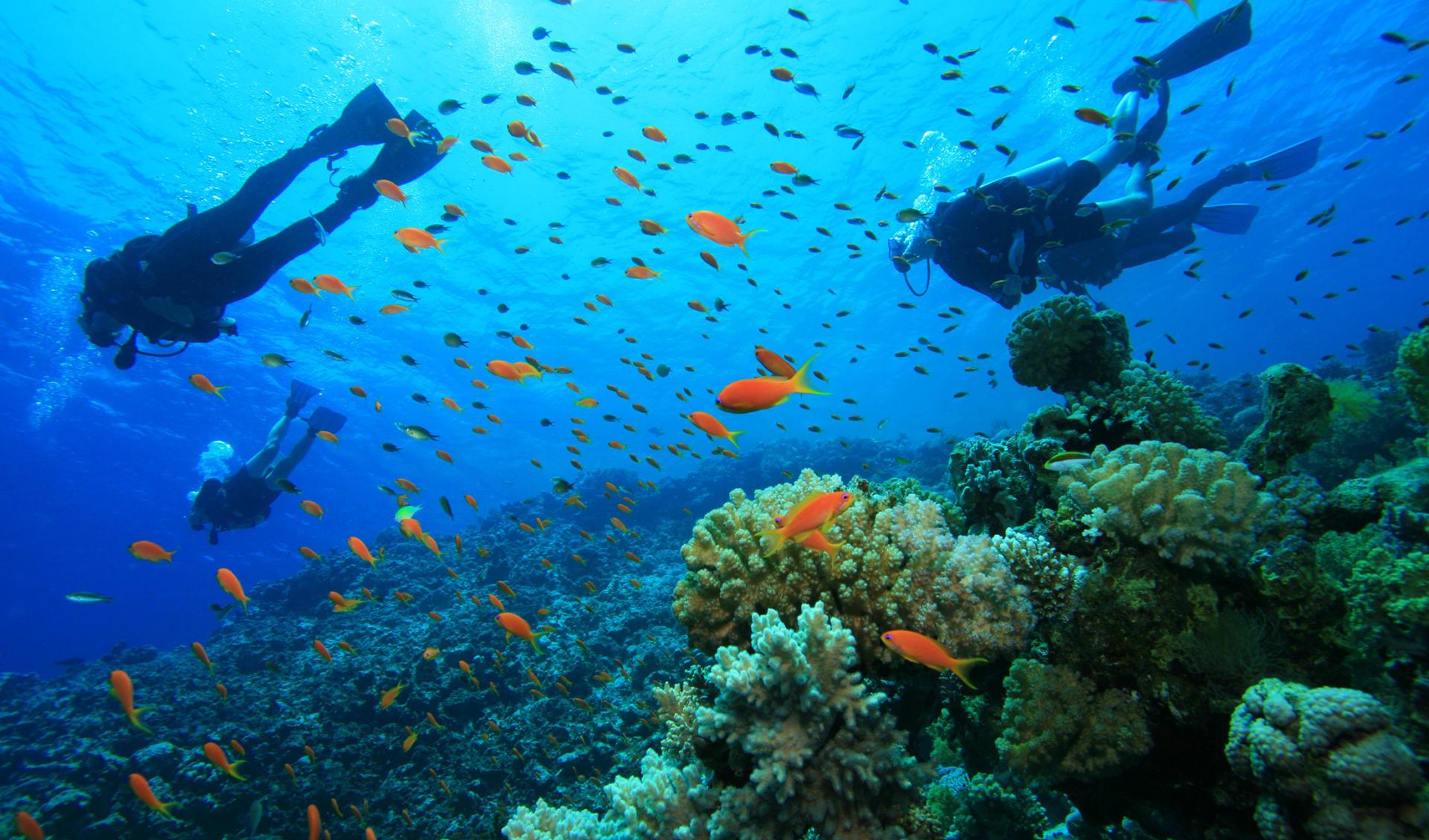 Tauchen mit tropischen Fischen, Costa Rica