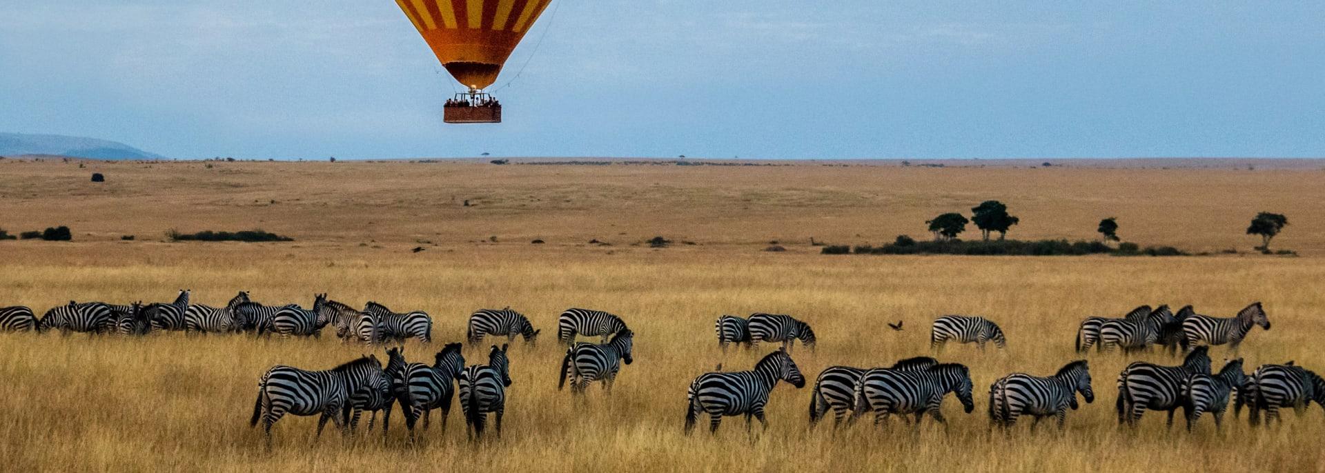 Zebras mit Luftballon im Hintergrund