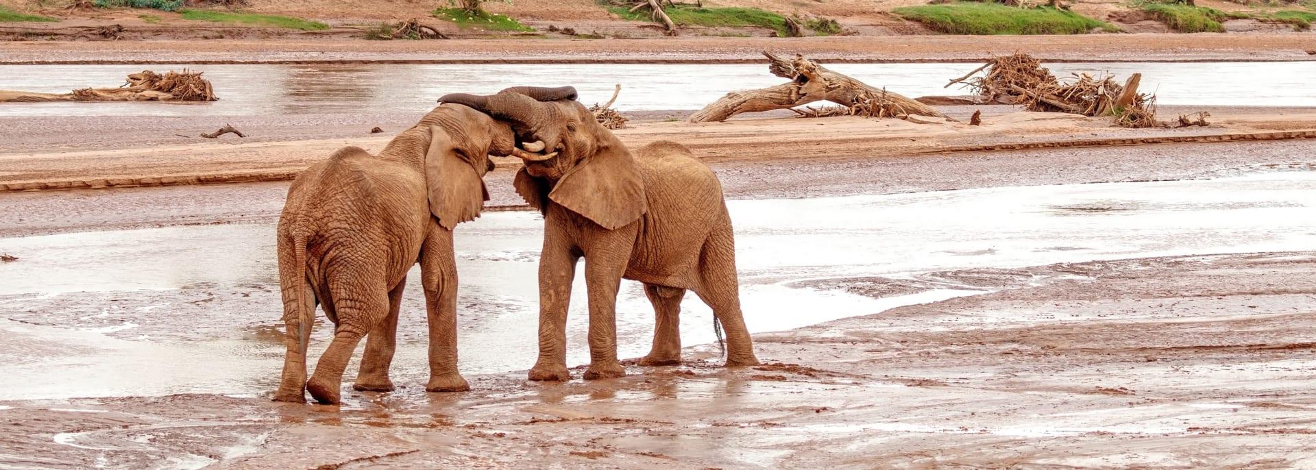 Samburu Nationalpark, Kenia