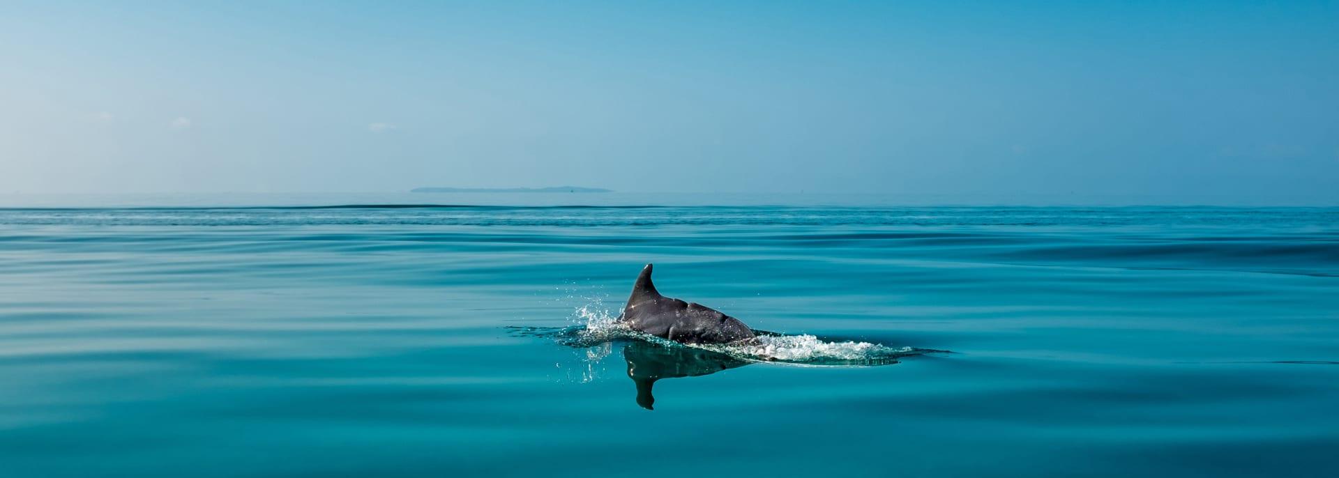 Delfinflosse im Meer vor Mosambik