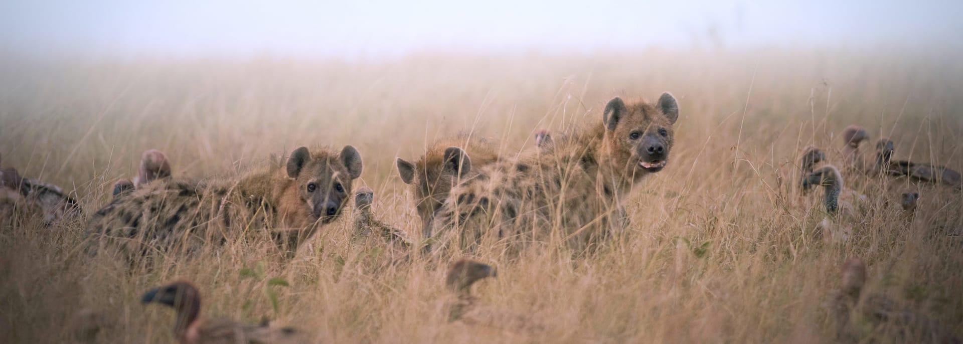 Liuwa Plain Nationalpark, Sambia/Simbabwe